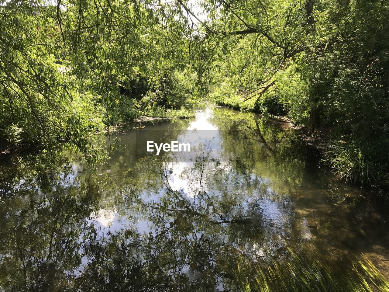 tree, water, forest, plant, nature, reflection, tranquility, growth, beauty in nature, land, no people, environment, scenics - nature, day, outdoors, waterfront, river, green color, tranquil scene, woodland, flowing water, flowing