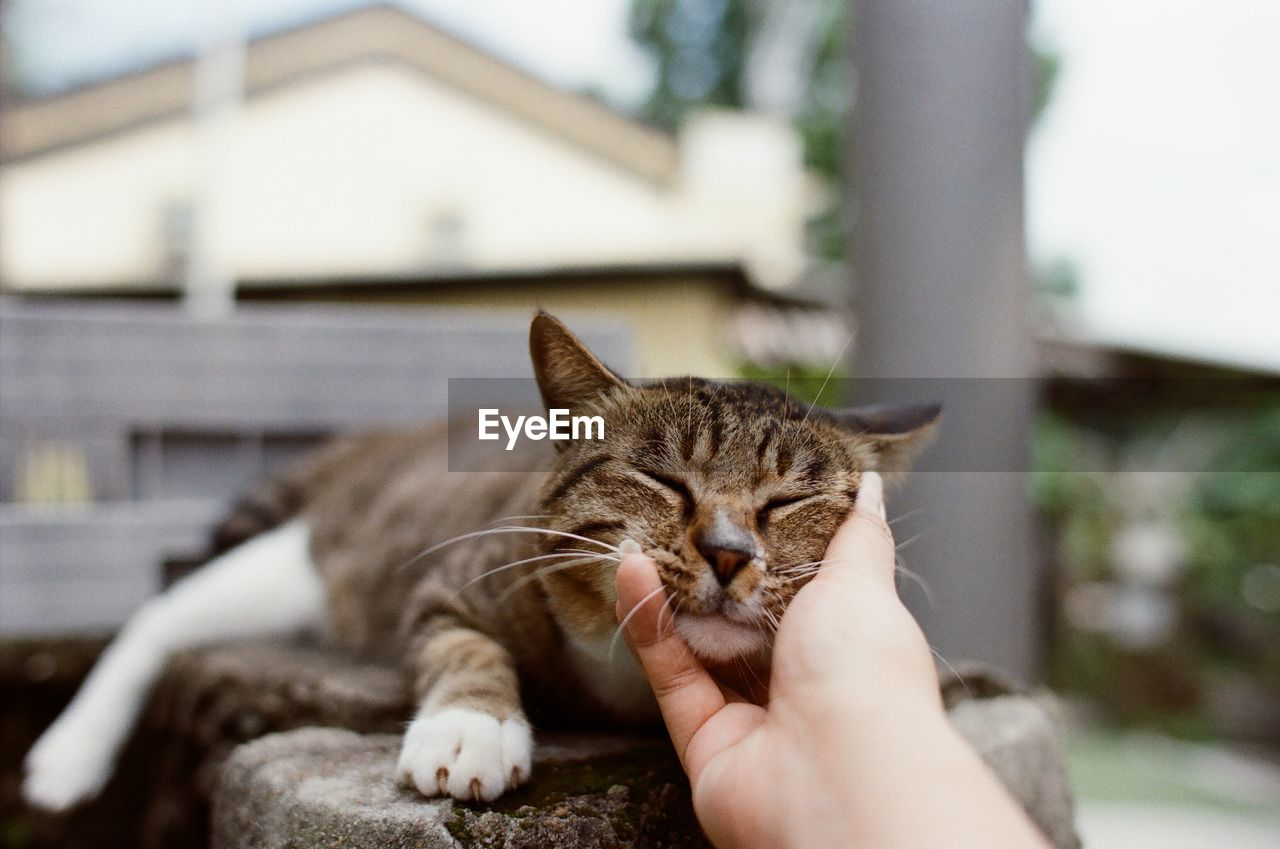 Close-Up Of Hand Petting Cat