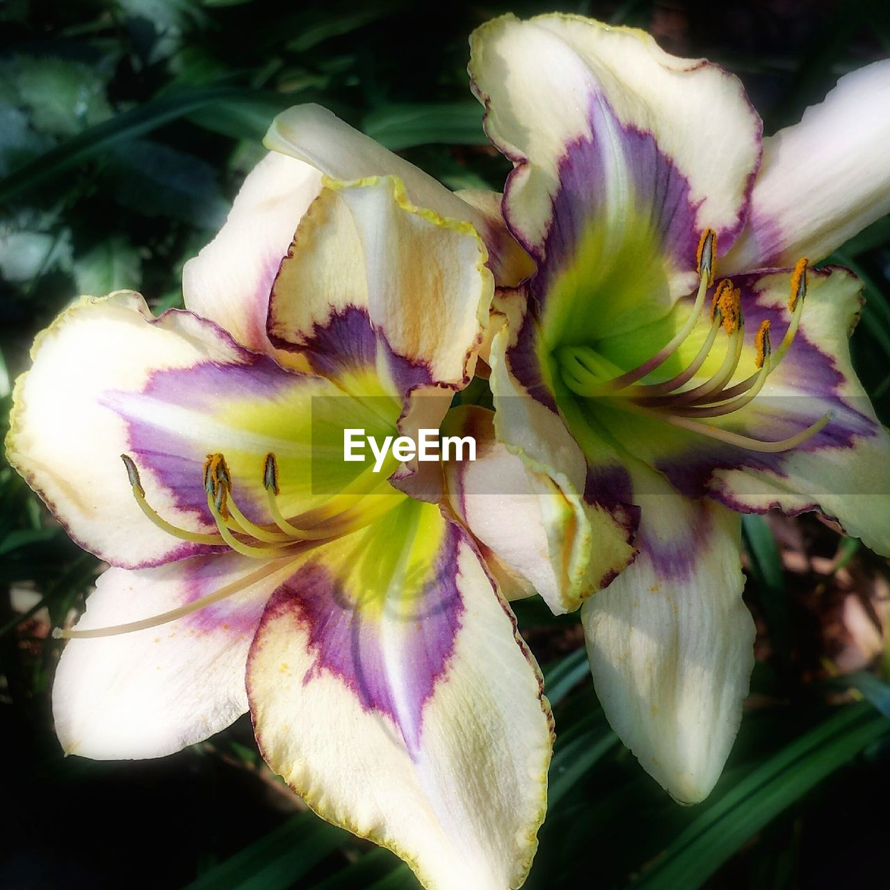 flower, petal, beauty in nature, fragility, freshness, growth, nature, flower head, springtime, botany, selective focus, blossom, no people, close-up, plant, stamen, day, outdoors, day lily, blooming