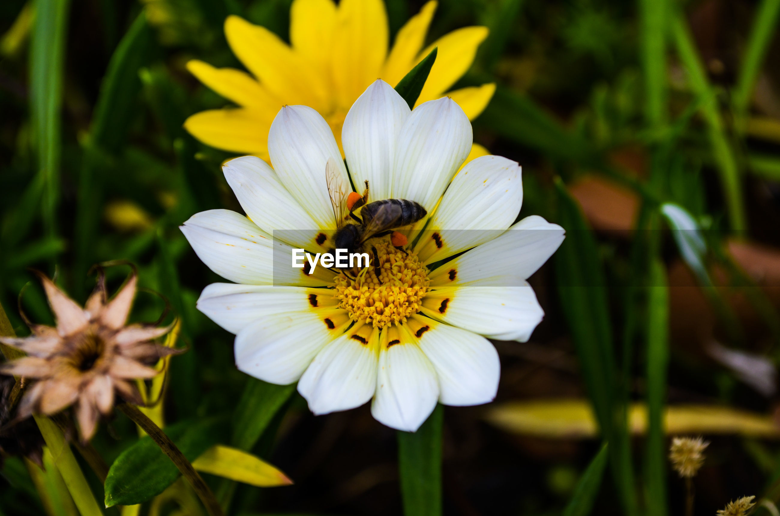 flower, flowering plant, fragility, vulnerability, petal, beauty in nature, plant, flower head, freshness, growth, inflorescence, animal themes, invertebrate, close-up, insect, one animal, animal, animals in the wild, pollen, animal wildlife, yellow, pollination, no people, outdoors