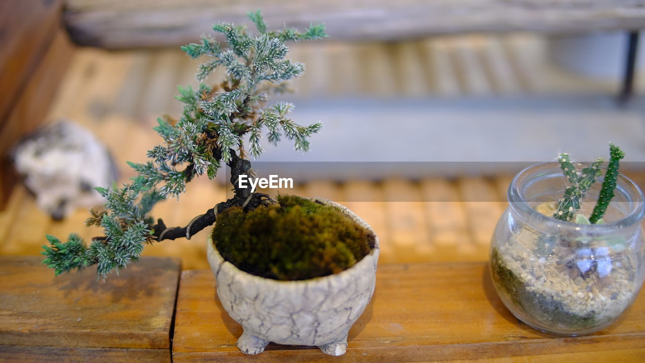 plant, table, growth, potted plant, green color, wood - material, focus on foreground, no people, nature, indoors, close-up, decoration, herb, food and drink, glass - material, freshness, still life, bonsai tree, leaf, succulent plant, glass, flower pot, houseplant