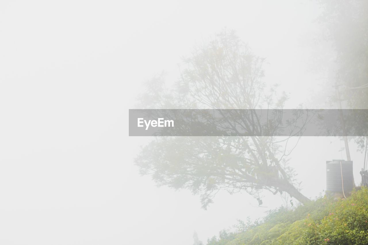 Low angle view of trees on field in foggy weather