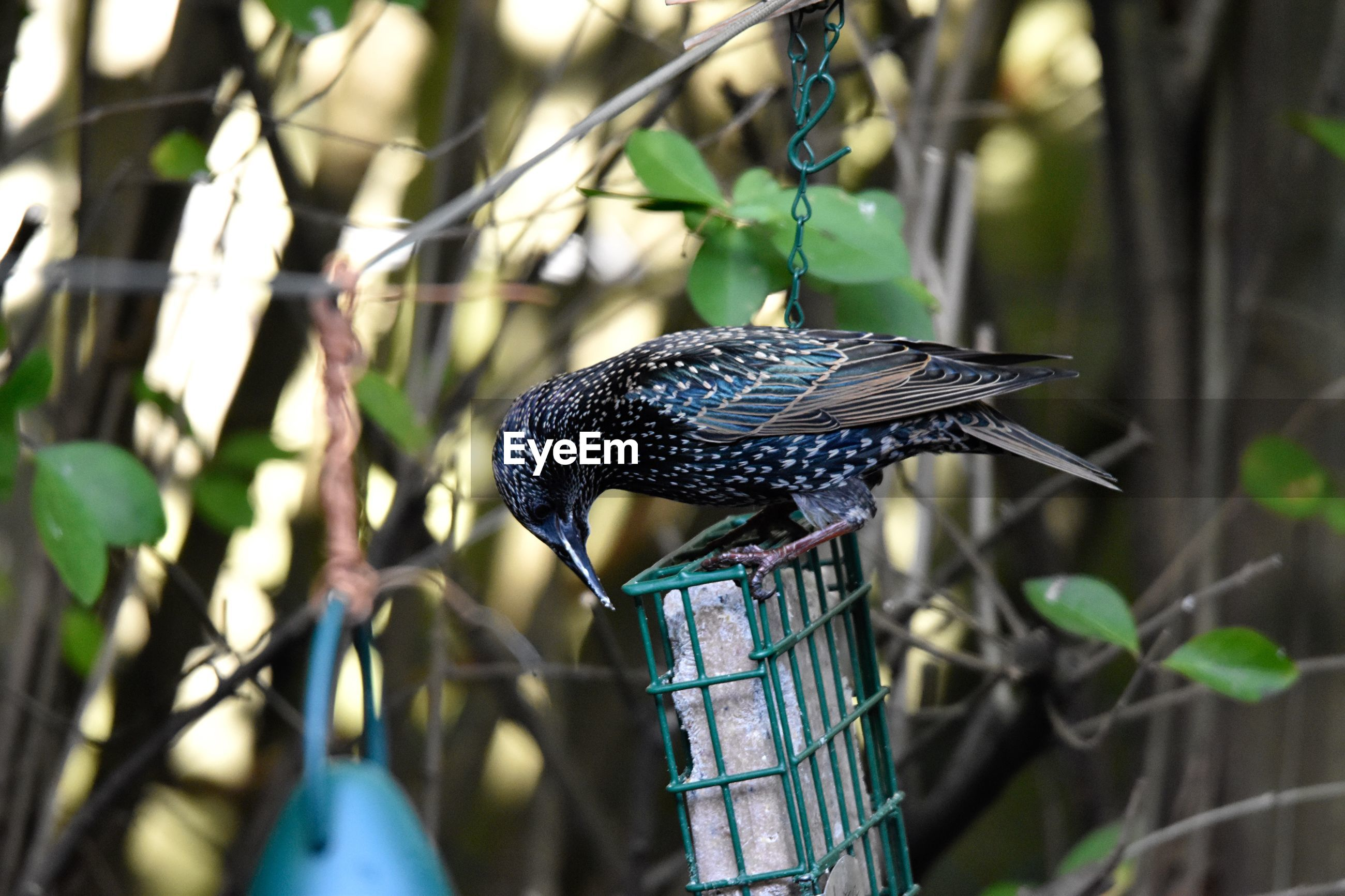Close-up of a bird perching on feeder