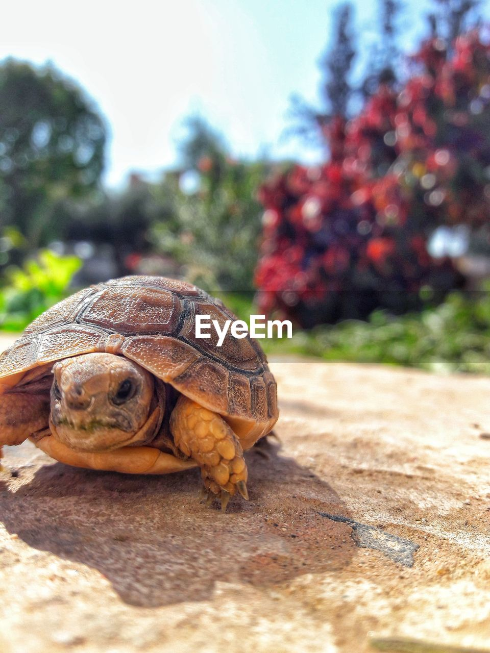 one animal, animal shell, tortoise, animals in the wild, animal themes, day, reptile, tortoise shell, outdoors, focus on foreground, nature, no people, animal wildlife, close-up