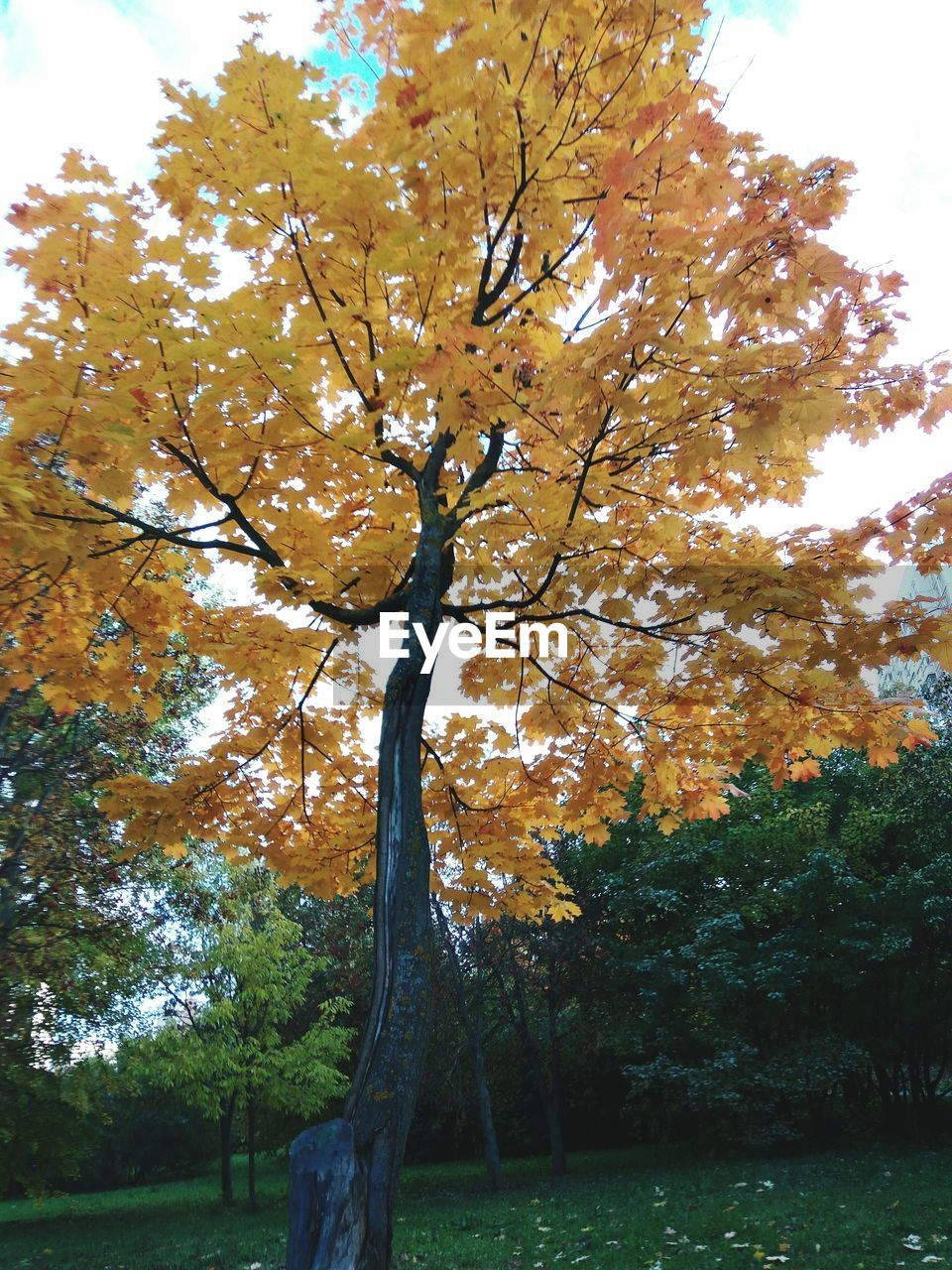 tree, nature, autumn, branch, beauty in nature, tranquility, growth, outdoors, no people, day, tranquil scene, tree trunk, leaf, scenics, sky