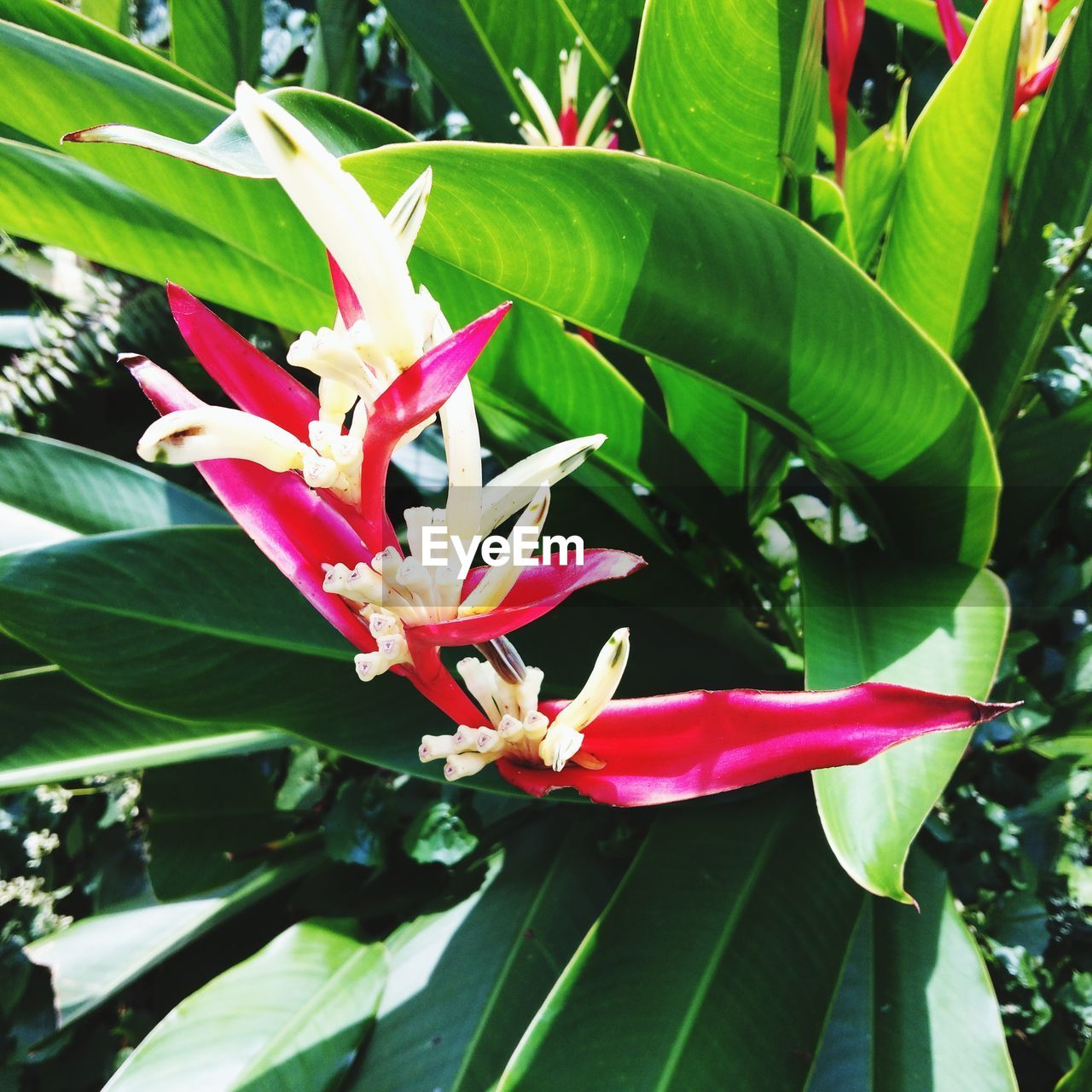 plant, growth, flowering plant, flower, beauty in nature, leaf, plant part, freshness, vulnerability, close-up, fragility, green color, nature, day, petal, flower head, inflorescence, pink color, no people, red, outdoors, pollen