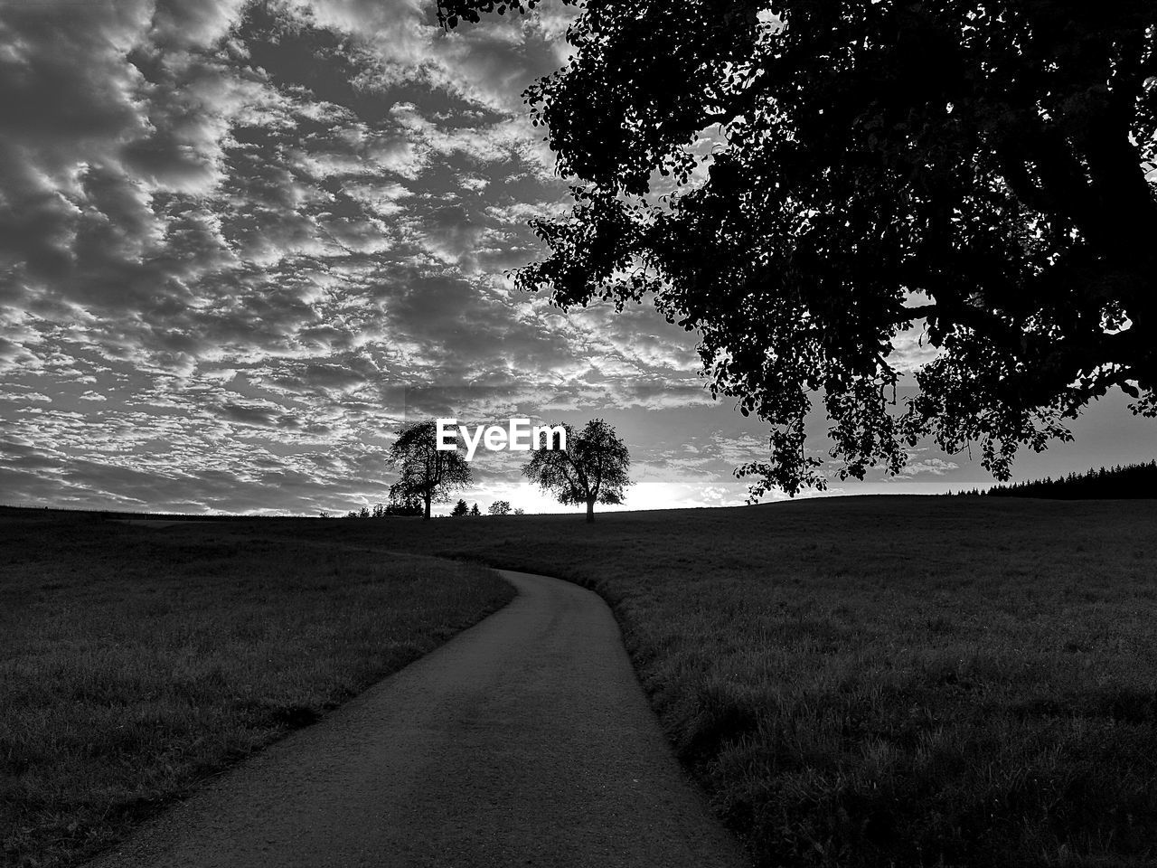 plant, sky, tree, cloud - sky, direction, the way forward, field, nature, beauty in nature, landscape, land, grass, scenics - nature, environment, tranquil scene, growth, road, tranquility, transportation, no people, diminishing perspective, outdoors, long
