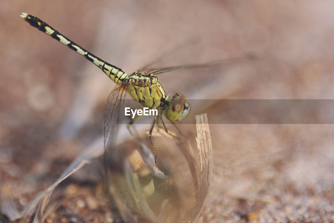 animals in the wild, insect, animal wildlife, one animal, invertebrate, animal themes, animal, close-up, day, selective focus, focus on foreground, nature, animal wing, plant, no people, outdoors, animal body part, zoology, dragonfly, macro, animal eye