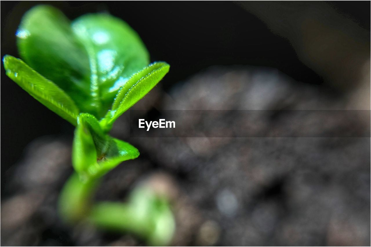 green color, close-up, leaf, plant, growth, nature, no people, new life, selective focus, freshness, outdoors, day, fragility, beauty in nature, animal themes