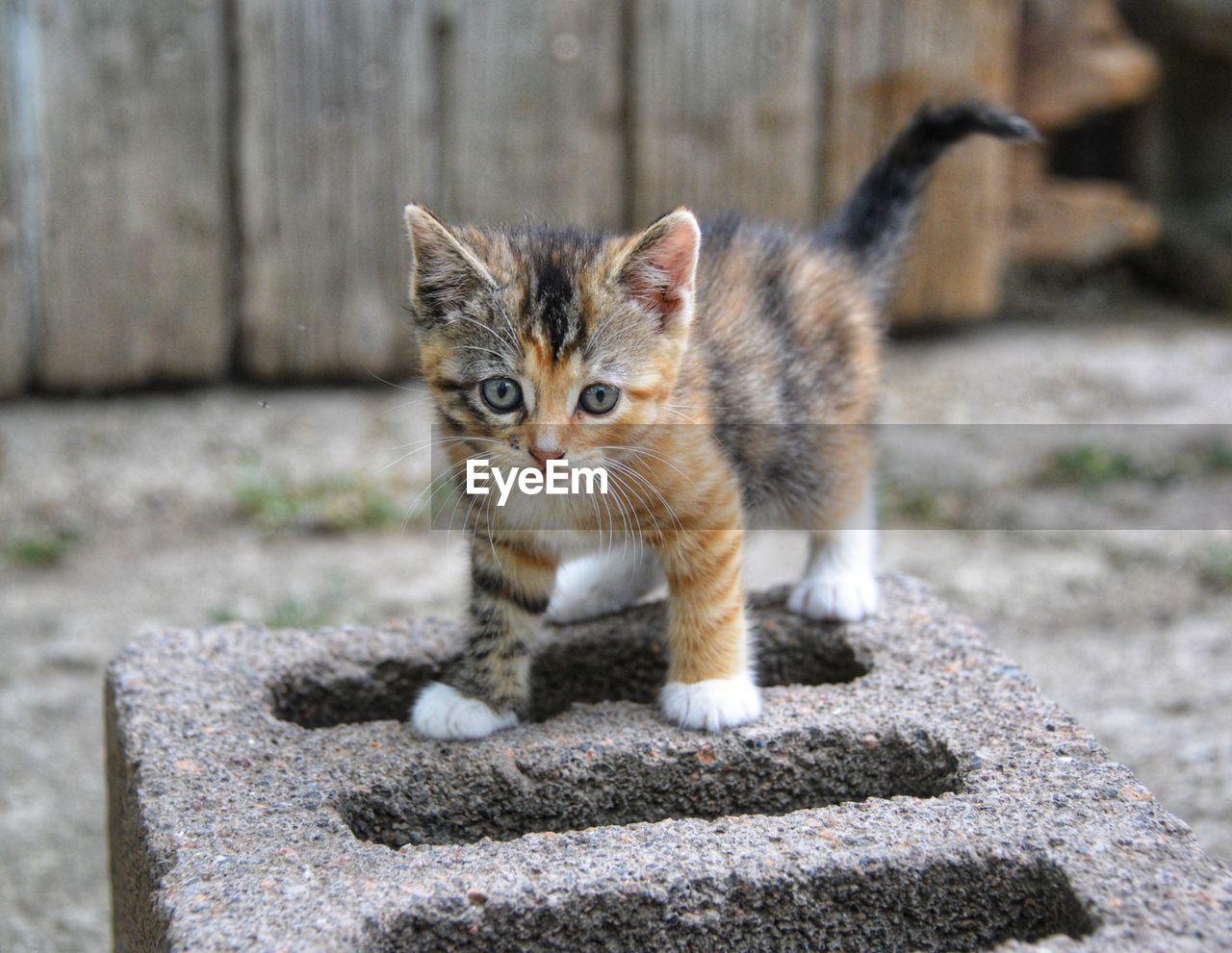 PORTRAIT OF KITTEN ON CONCRETE WALL