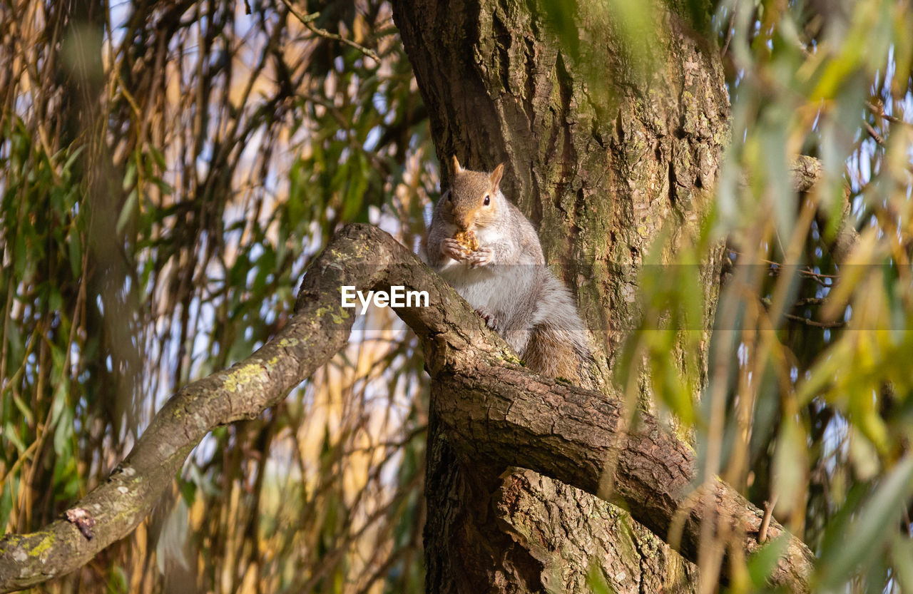 tree, animal themes, one animal, plant, animal, mammal, branch, trunk, tree trunk, animal wildlife, no people, vertebrate, animals in the wild, nature, selective focus, sitting, portrait, rodent, day, outdoors, whisker