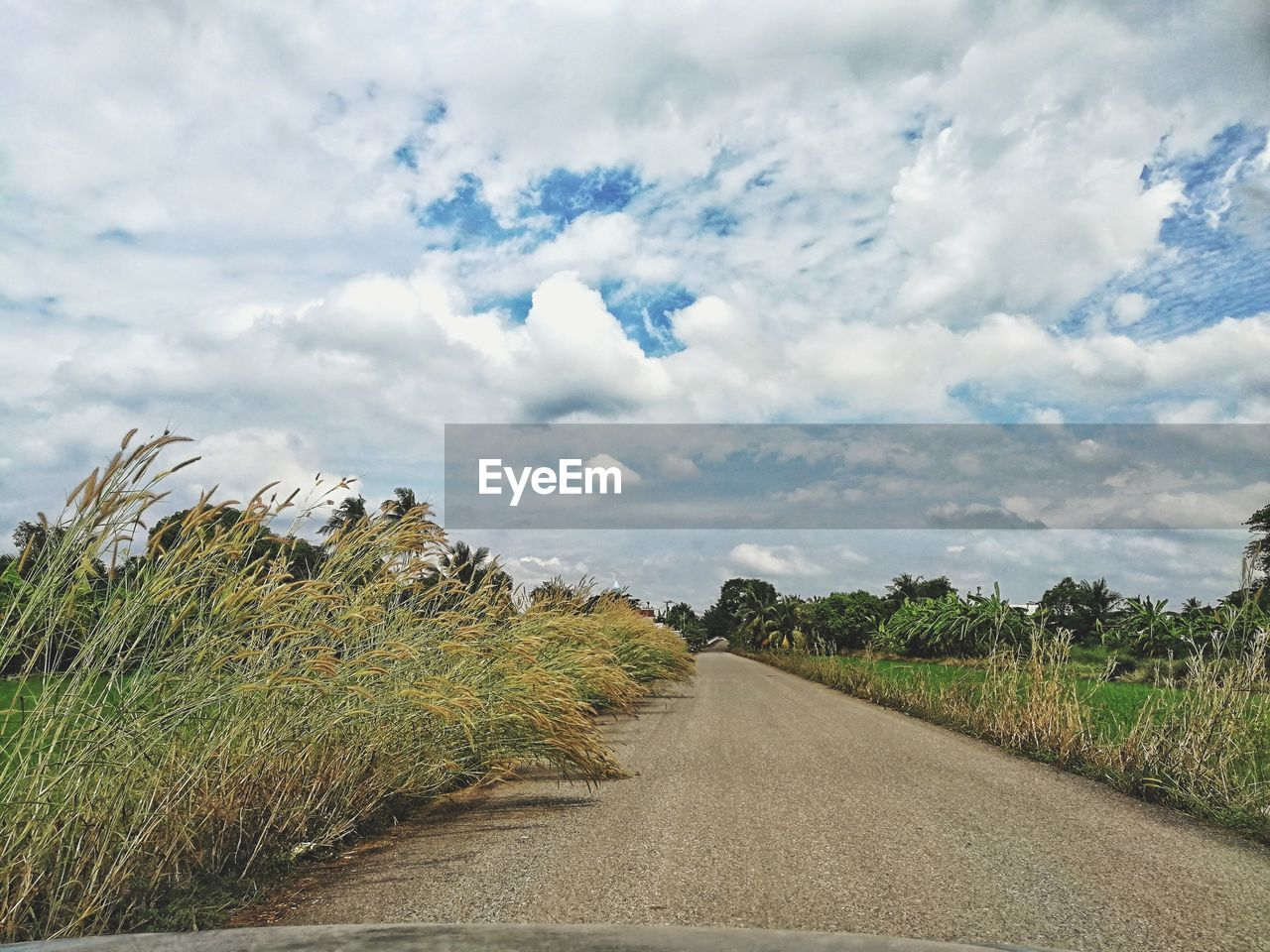 cloud - sky, sky, plant, road, beauty in nature, transportation, tranquility, nature, tranquil scene, landscape, the way forward, environment, direction, scenics - nature, land, day, no people, grass, growth, diminishing perspective, outdoors, long