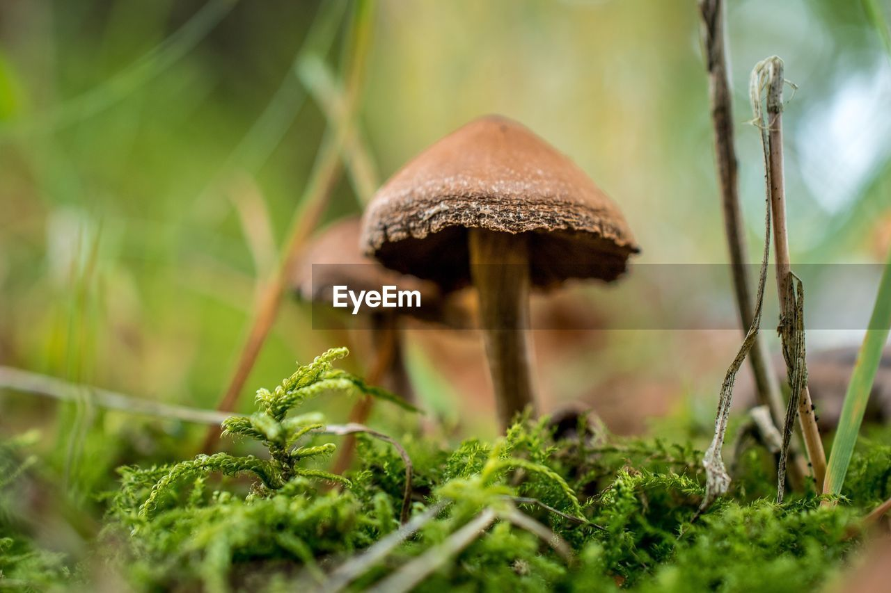 mushroom, fungus, plant, growth, vegetable, selective focus, food, green color, land, toadstool, close-up, nature, no people, day, field, grass, beauty in nature, edible mushroom, forest, vulnerability, outdoors, surface level