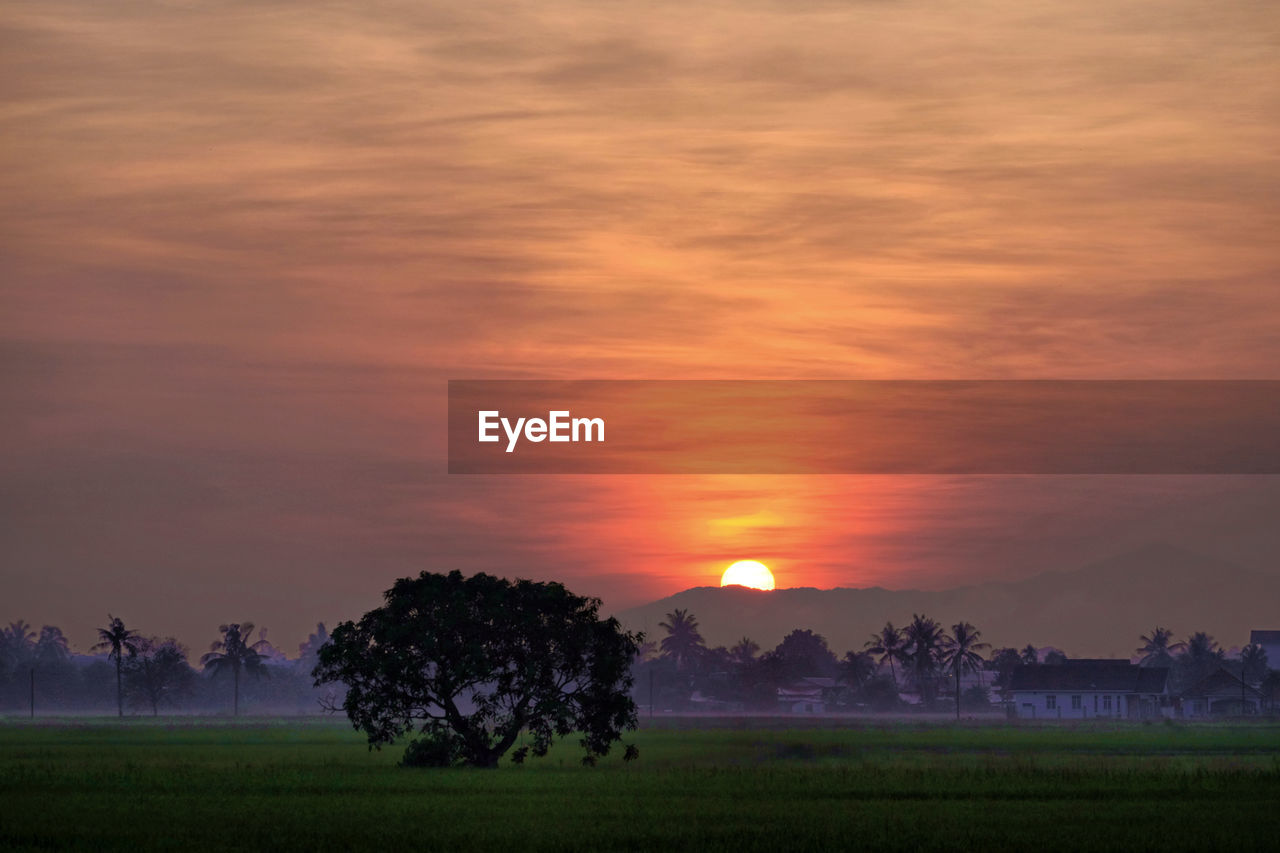 sunset, beauty in nature, tree, nature, tranquility, tranquil scene, scenics, field, landscape, orange color, sky, idyllic, growth, no people, agriculture, outdoors, sun, cloud - sky, rural scene, grass, day