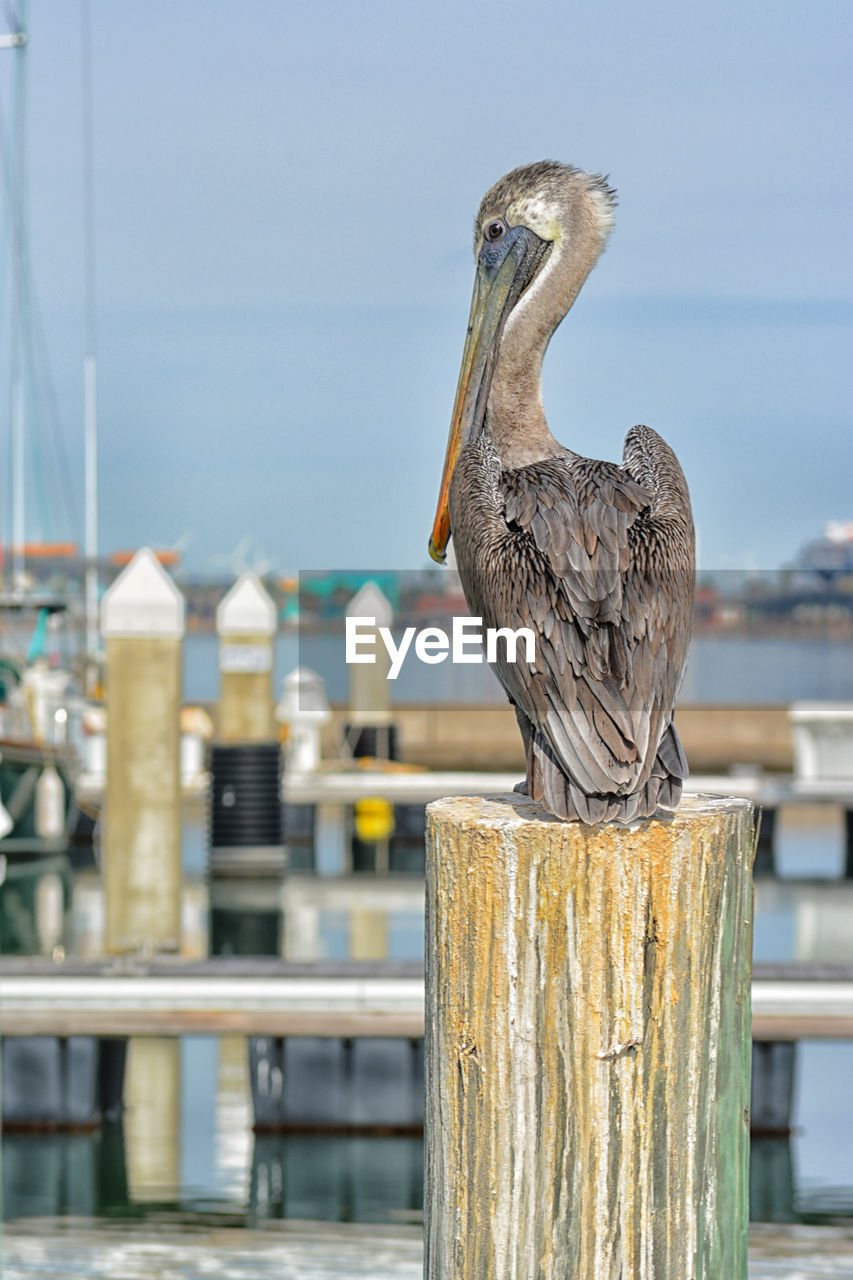 BIRD PERCHING ON WOODEN POST IN FRONT OF RAILING