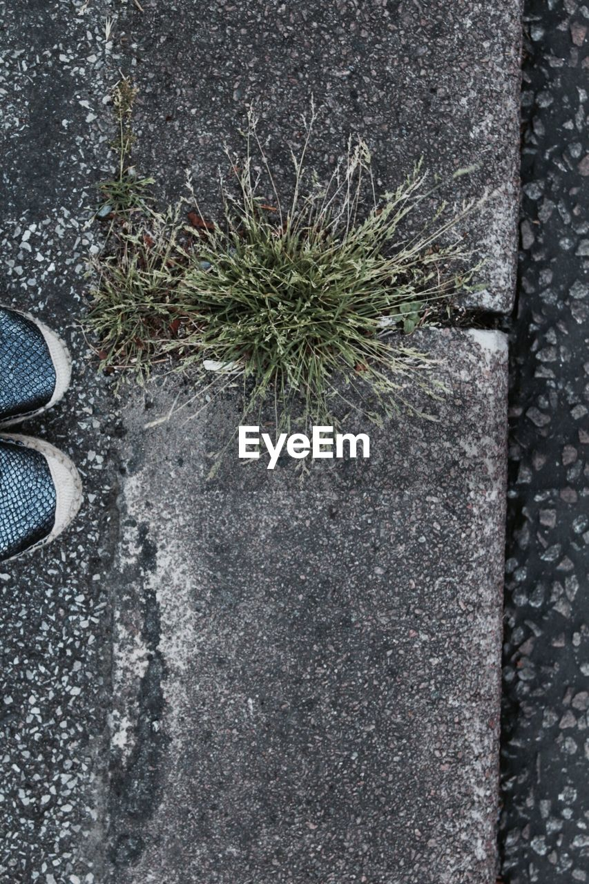 low section, human leg, one person, standing, directly above, day, shoe, body part, footpath, high angle view, human body part, nature, outdoors, unrecognizable person, plant, real people, city, road, street, human foot, concrete