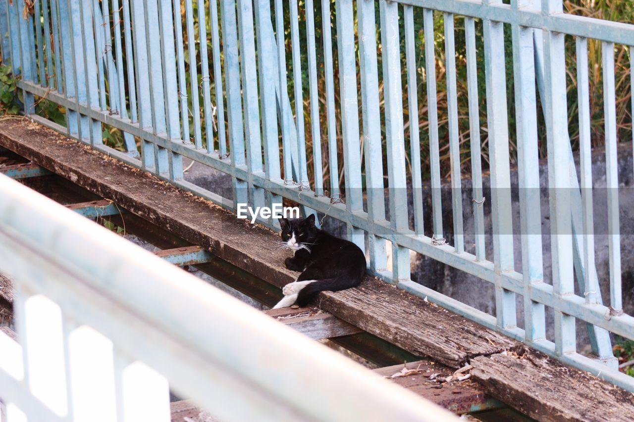 Cat On Old Bridge