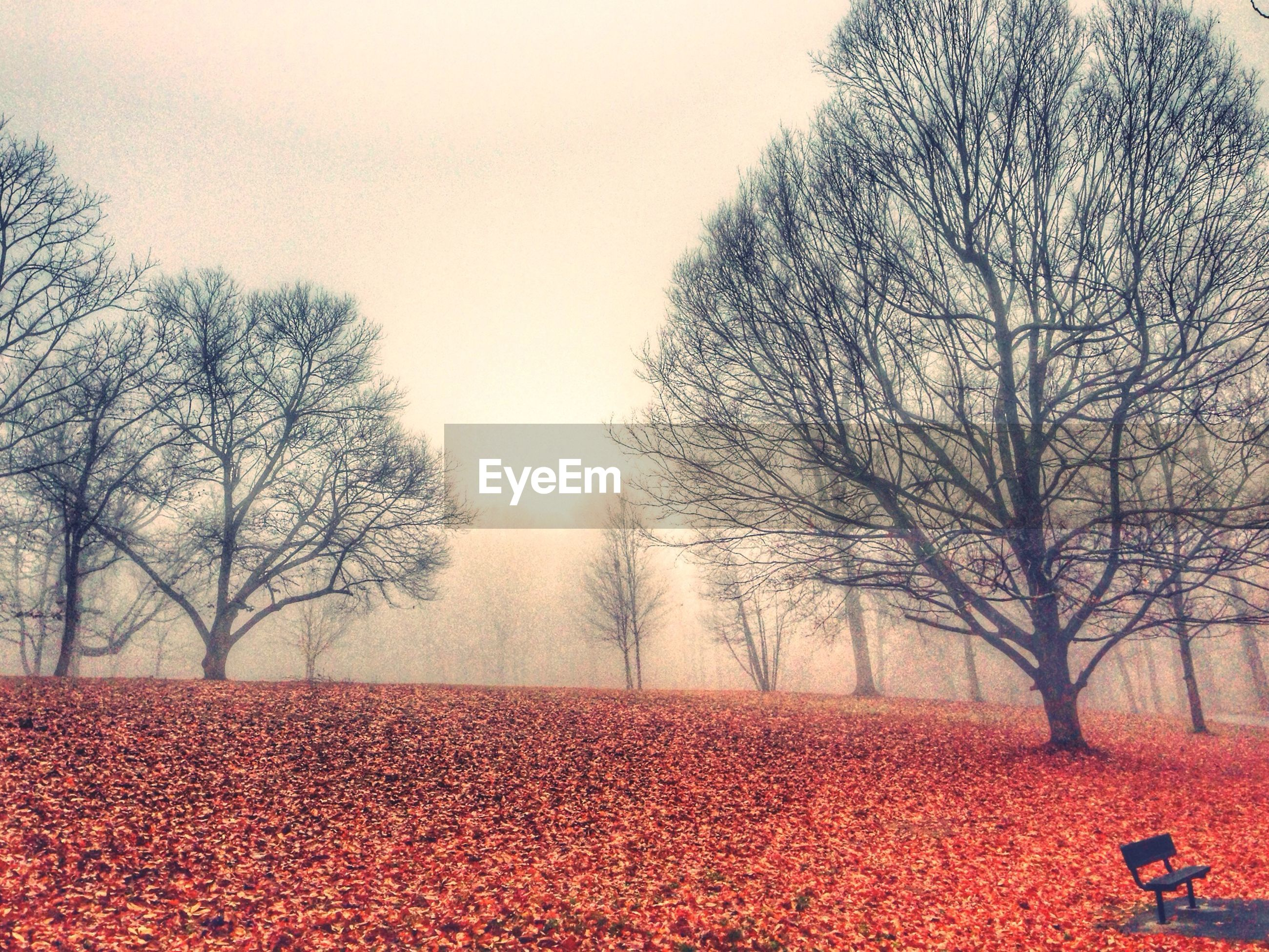 Bare trees on field against clear sky during autumn