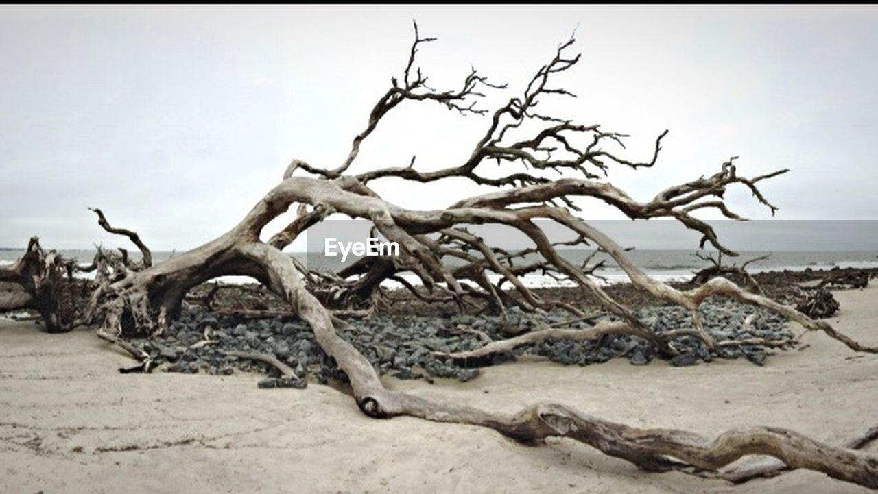 nature, sand, bare tree, outdoors, day, tree, no people, sky, tranquility, branch, tree trunk, scenics, landscape, arid climate, dead tree, beauty in nature, horizon over water