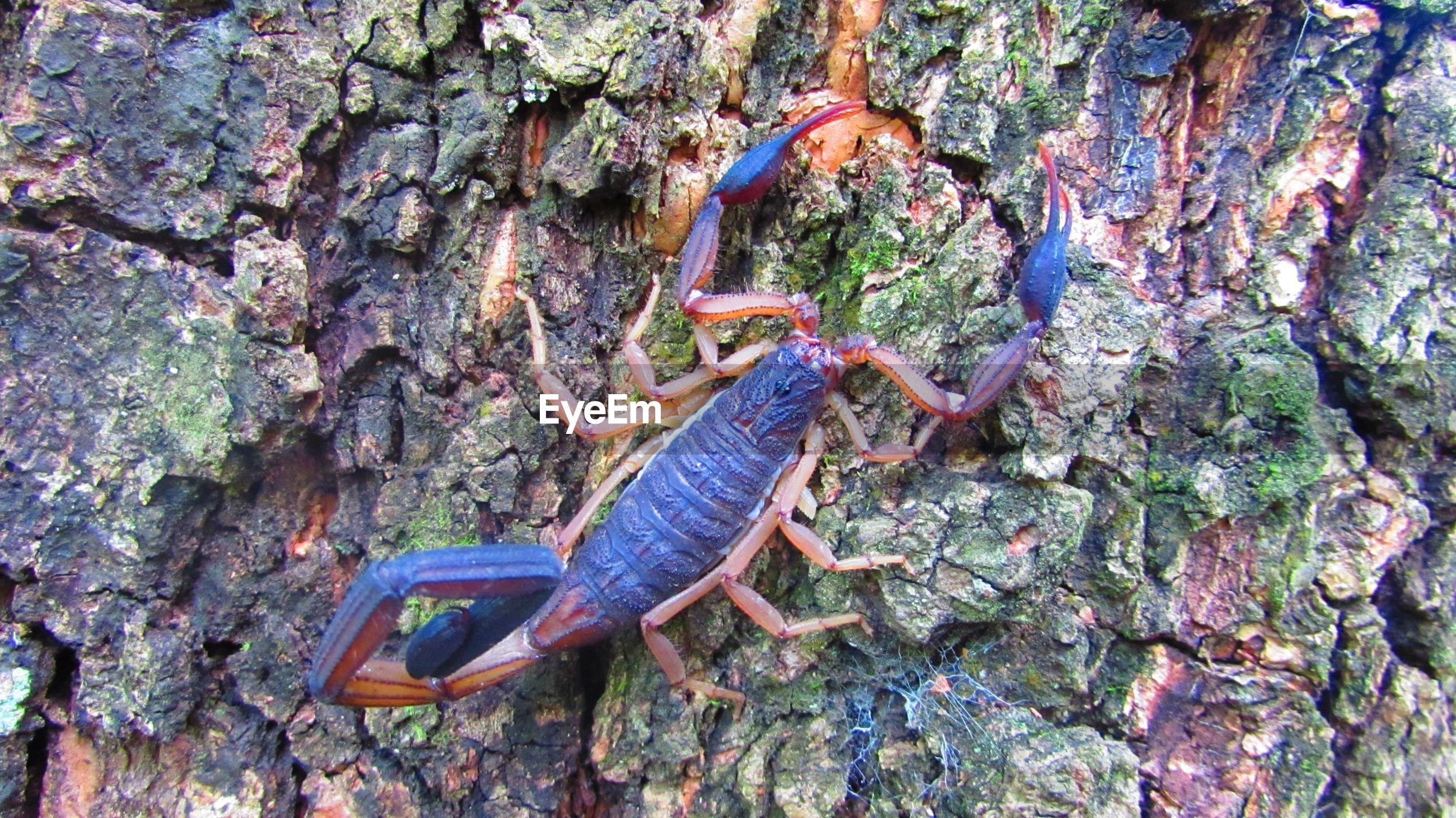 Close-up of scorpion on tree trunk