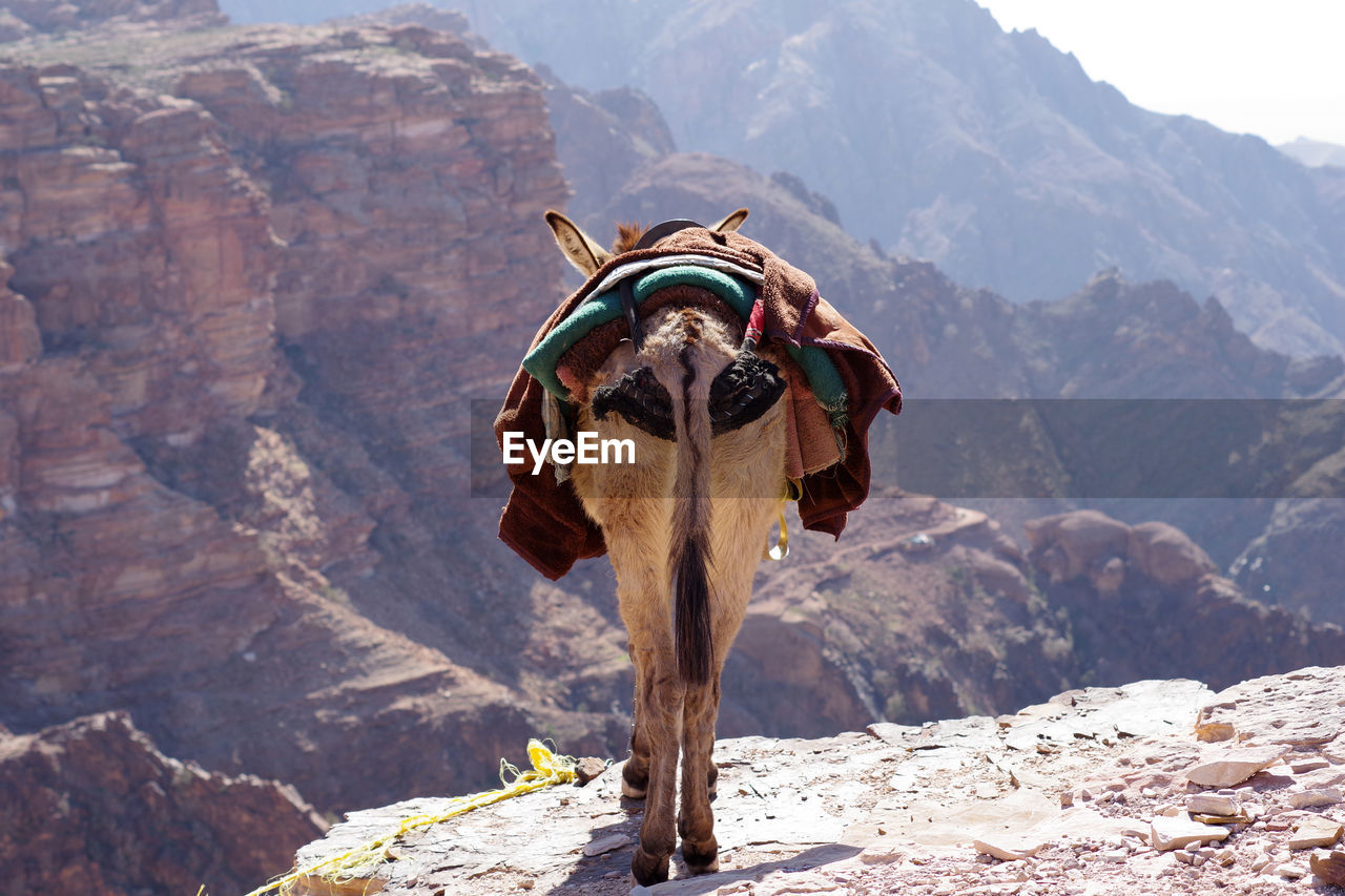 View of a donkey on rock
