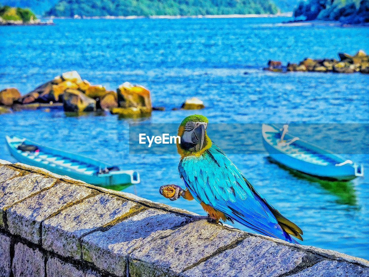 water, one animal, blue, animal themes, sea, animals in the wild, perching, no people, focus on foreground, bird, day, wood - material, animal wildlife, outdoors, nautical vessel, nature, close-up, beauty in nature, parrot, gold and blue macaw, macaw, sky
