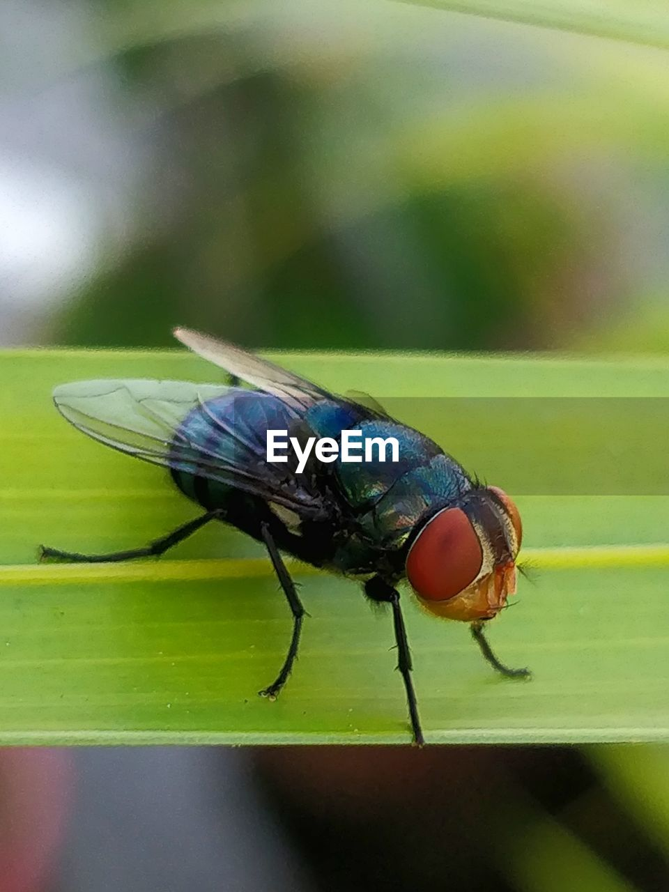 insect, invertebrate, animal themes, one animal, animal wildlife, animals in the wild, animal, close-up, focus on foreground, day, fly, animal wing, green color, nature, housefly, outdoors, no people, selective focus, plant part, leaf, animal eye