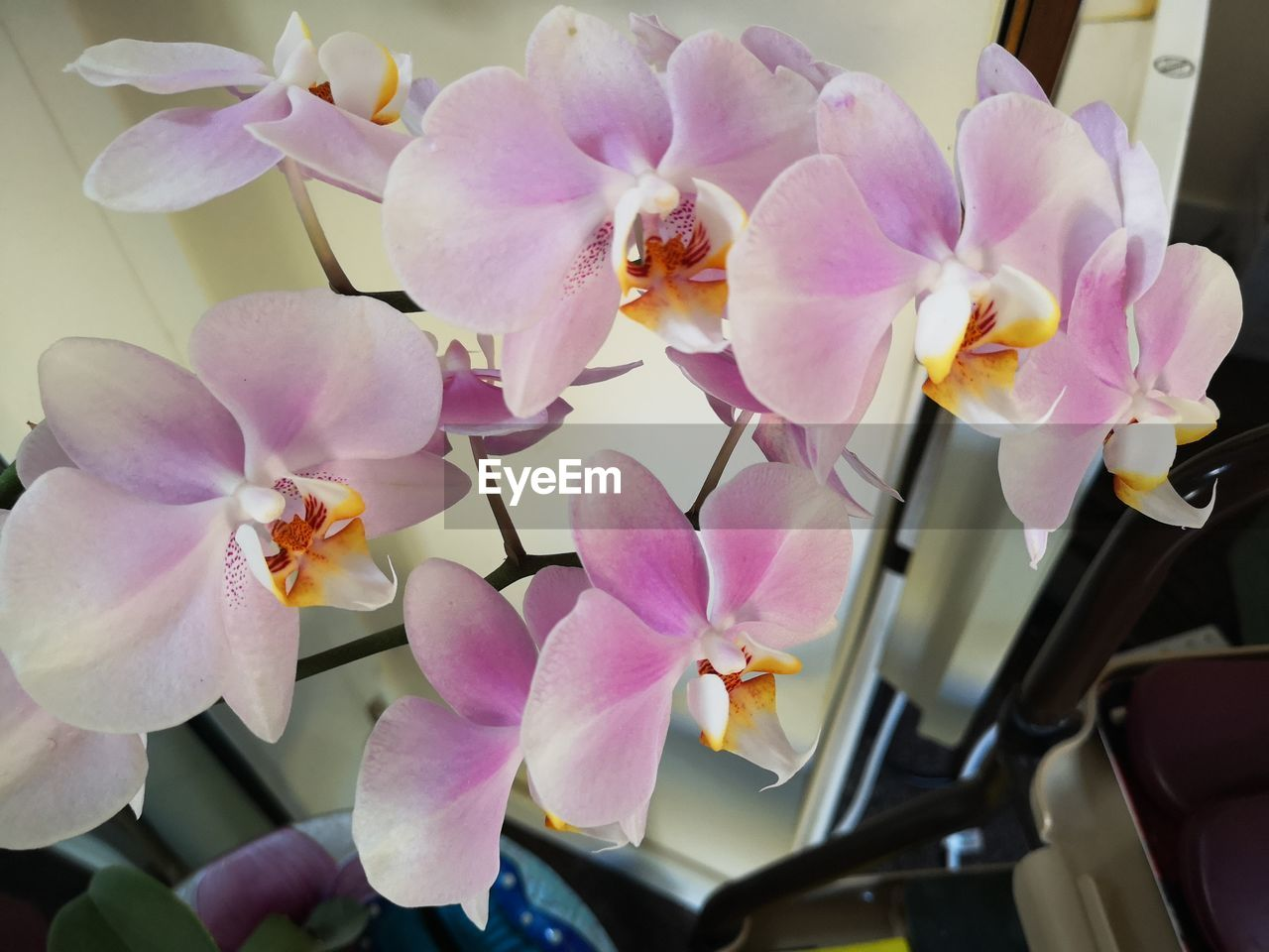 flowering plant, flower, plant, vulnerability, beauty in nature, fragility, petal, freshness, inflorescence, flower head, close-up, pink color, growth, orchid, no people, nature, selective focus, outdoors, day, purple, flower arrangement