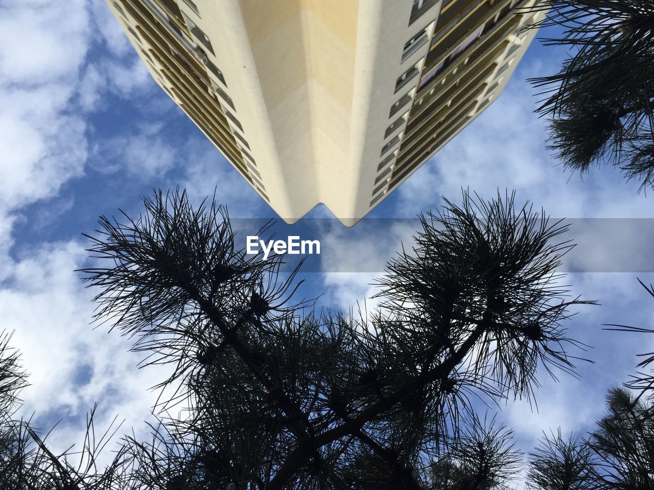 low angle view, tree, sky, growth, outdoors, day, architecture, cloud - sky, no people, building exterior, built structure, palm tree, leaf, skyscraper, branch, nature, city
