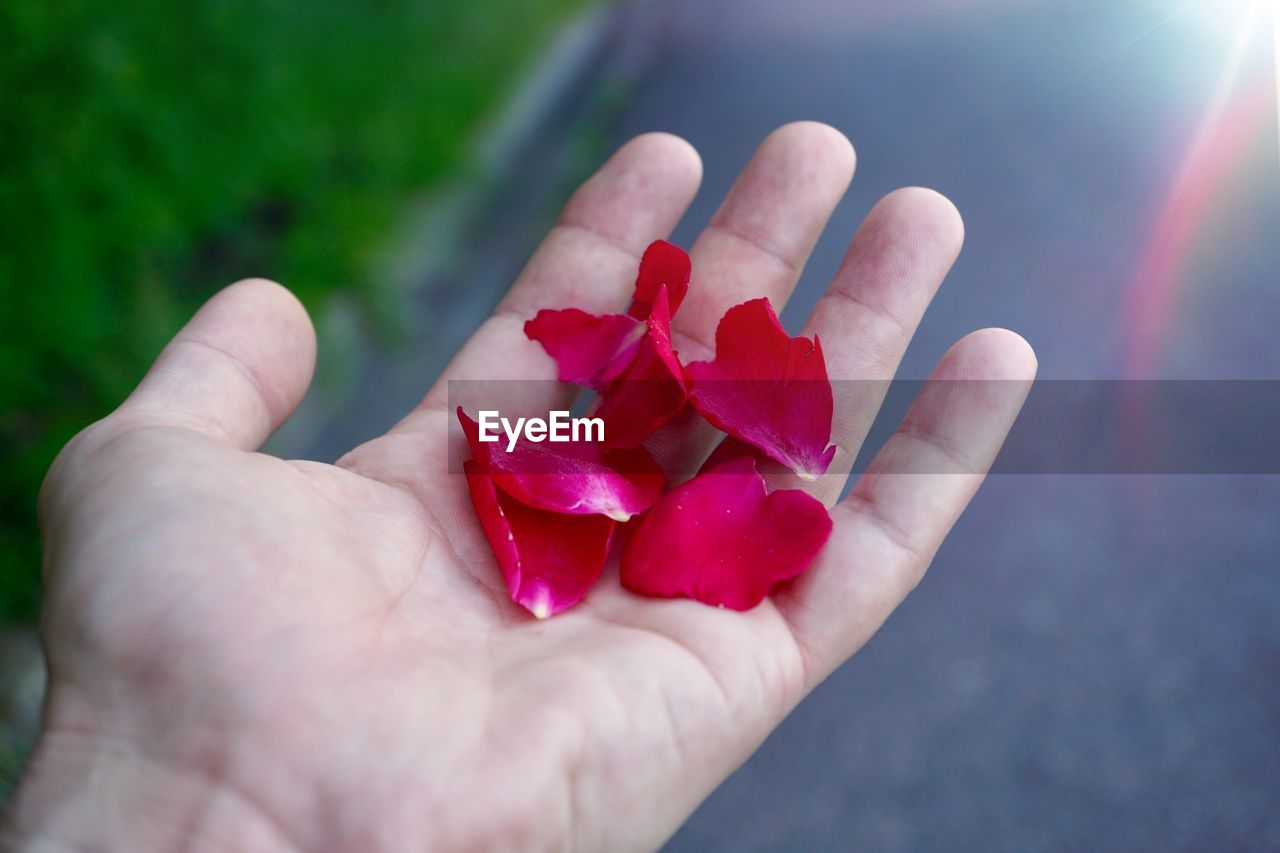 human body part, human hand, hand, one person, red, holding, real people, body part, close-up, freshness, personal perspective, finger, human finger, day, nature, plant, unrecognizable person, flower, pink color, outdoors, human limb