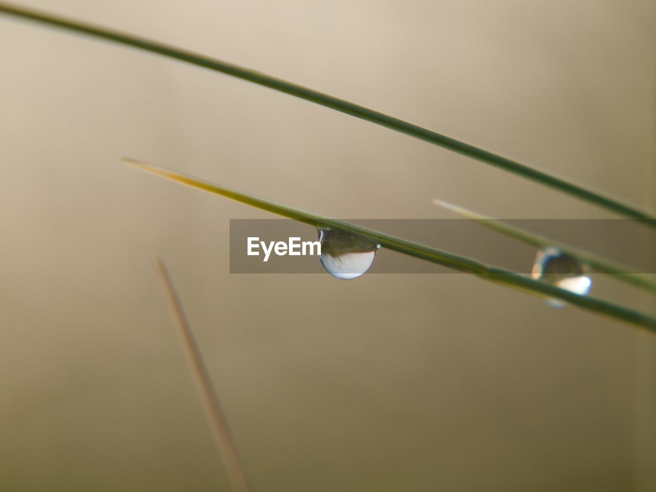 drop, close-up, water, nature, plant, no people, vulnerability, focus on foreground, fragility, growth, selective focus, beauty in nature, wet, plant stem, blade of grass, grass, day, plant part, leaf, dew, rain, raindrop, purity