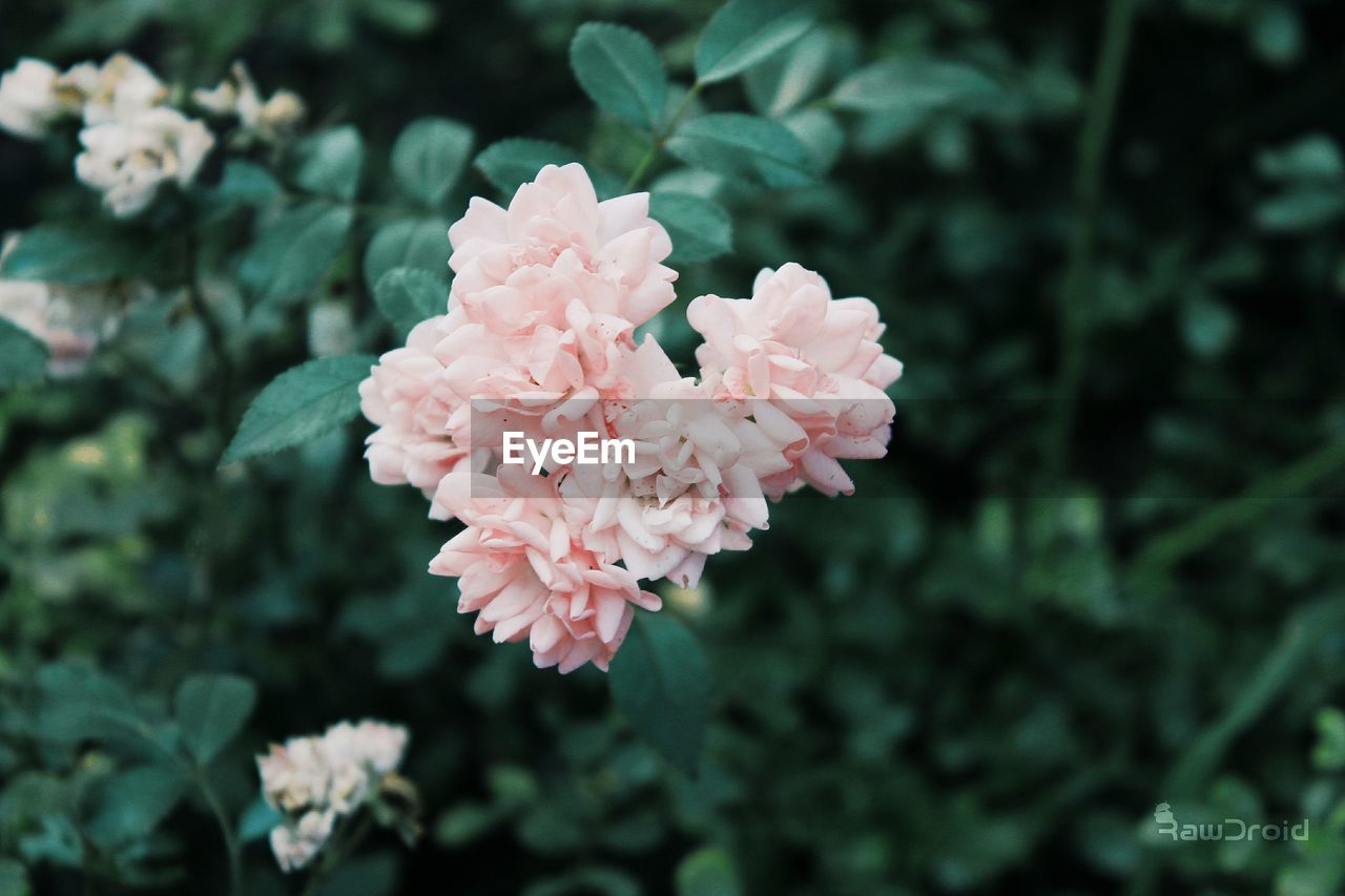 flower, beauty in nature, growth, nature, petal, fragility, plant, blooming, focus on foreground, freshness, no people, outdoors, day, flower head, close-up