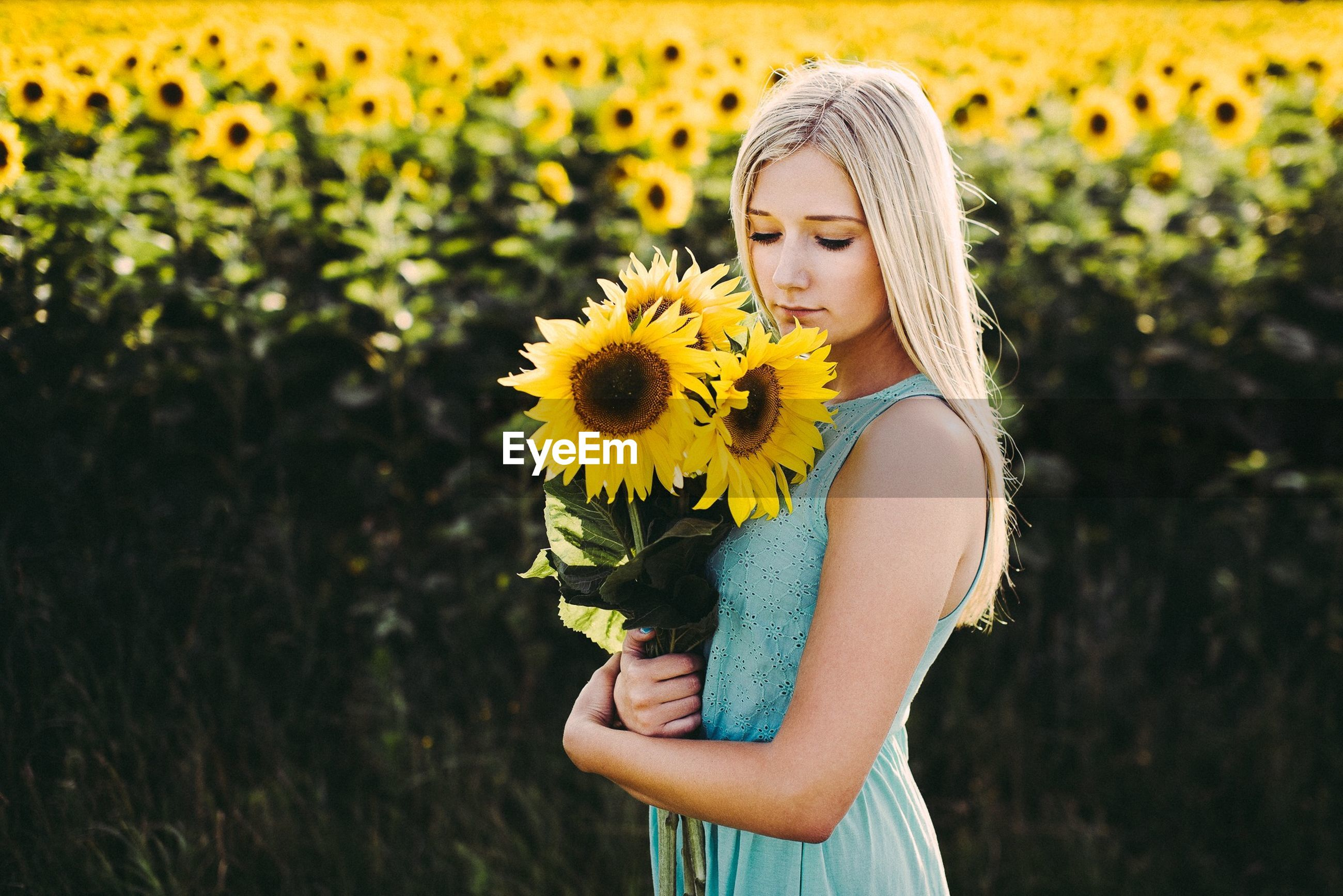 Young woman holding sunflowers on field