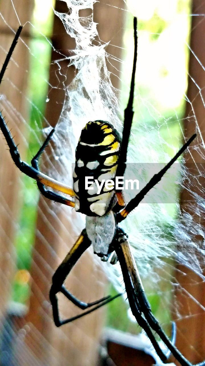 one animal, spider, animal themes, spider web, animals in the wild, insect, close-up, focus on foreground, web, no people, nature, day, animal leg, animal wildlife, outdoors, beauty in nature
