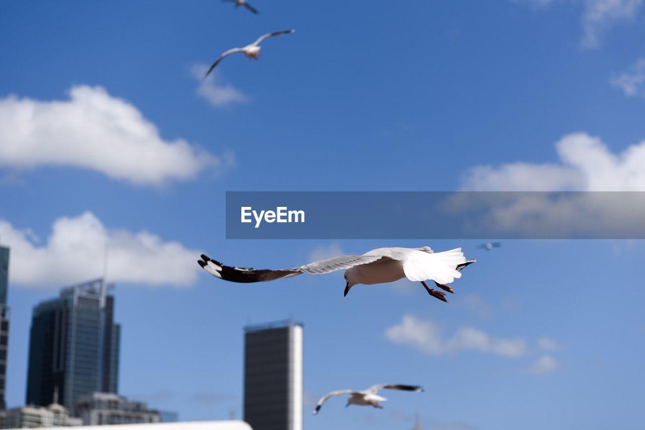 Seagulls Flying Against Buildings