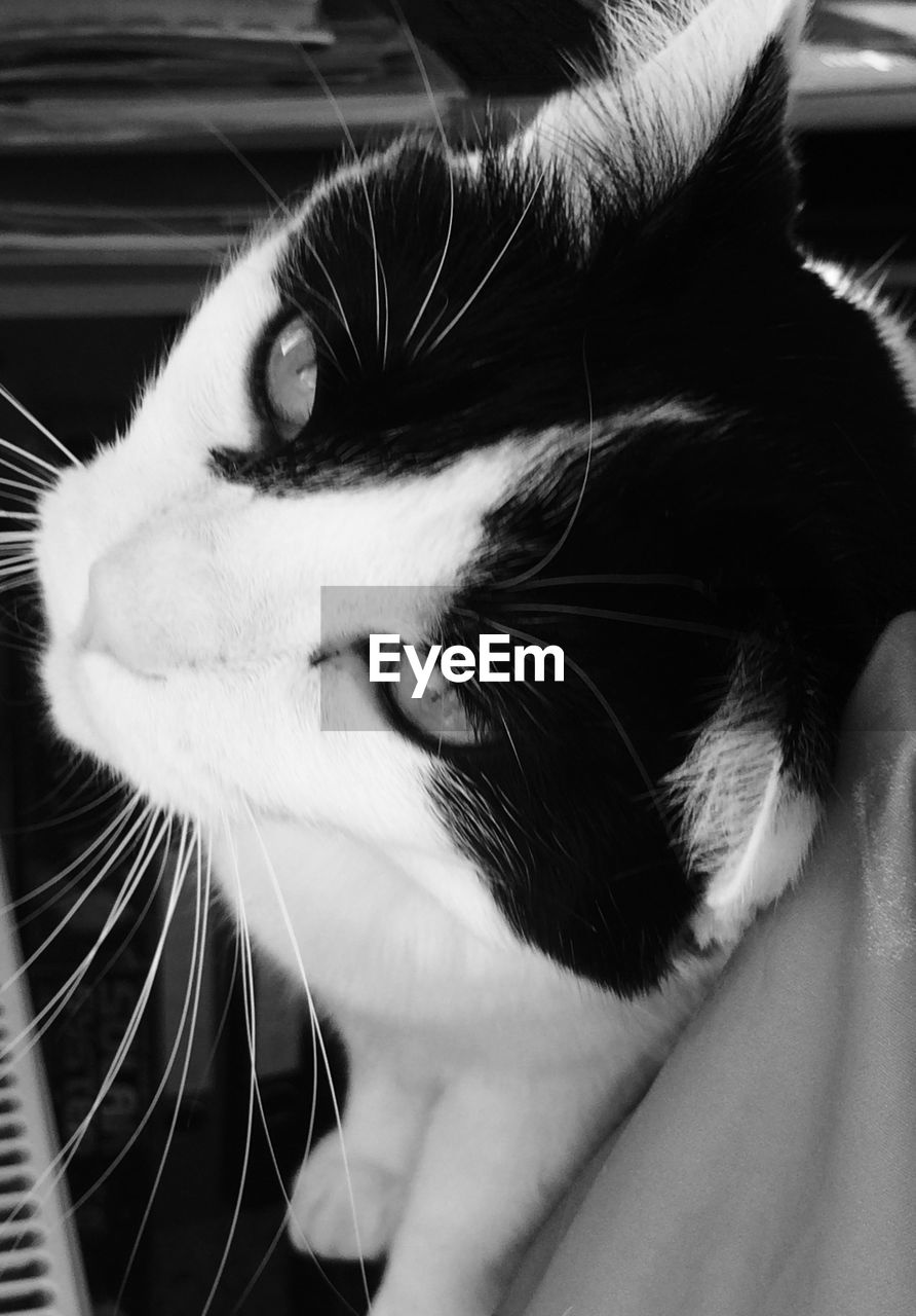 domestic animals, pets, domestic cat, animal themes, mammal, feline, one animal, whisker, no people, close-up, indoors, day