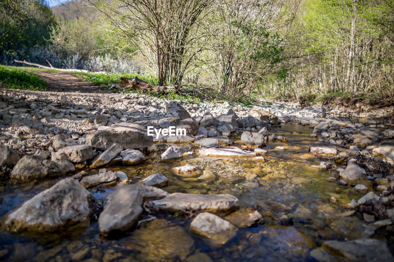 tree, water, plant, solid, nature, rock, day, no people, forest, rock - object, tranquility, land, outdoors, landscape, tranquil scene, animal, stream - flowing water, animal wildlife, animal themes, surface level, flowing water, flowing