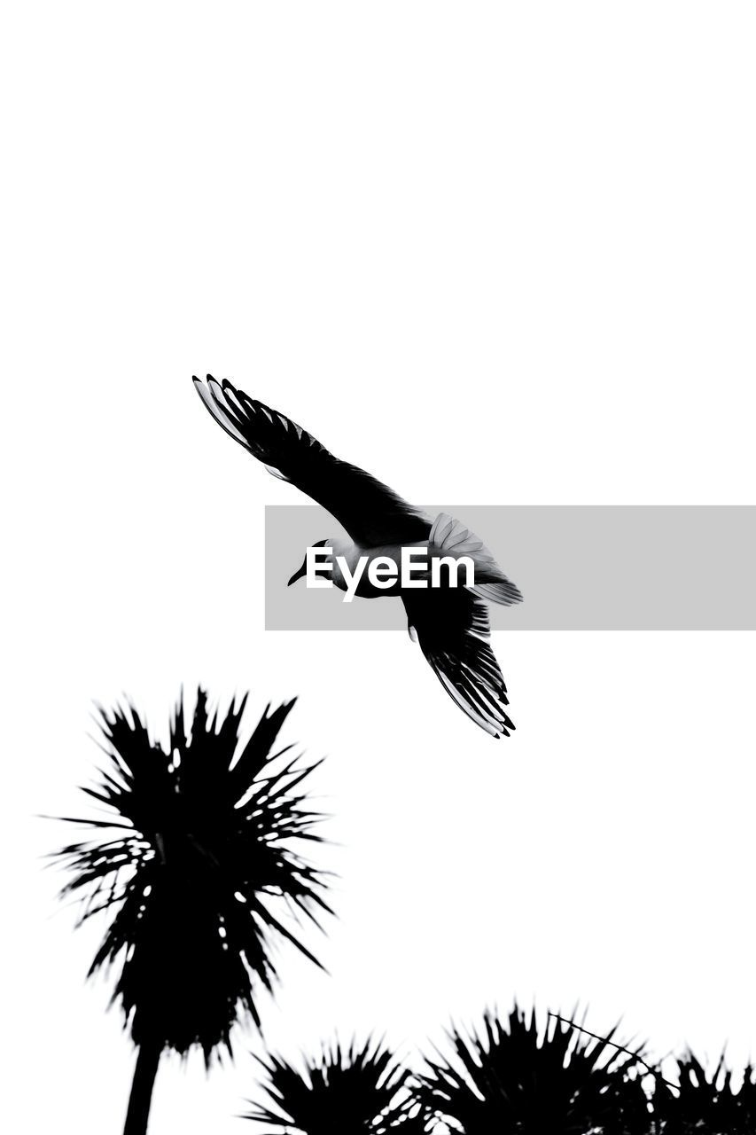 animals in the wild, bird, animal themes, low angle view, one animal, spread wings, flying, animal wildlife, clear sky, nature, mid-air, no people, day, outdoors, beauty in nature, tree, sky, bird of prey