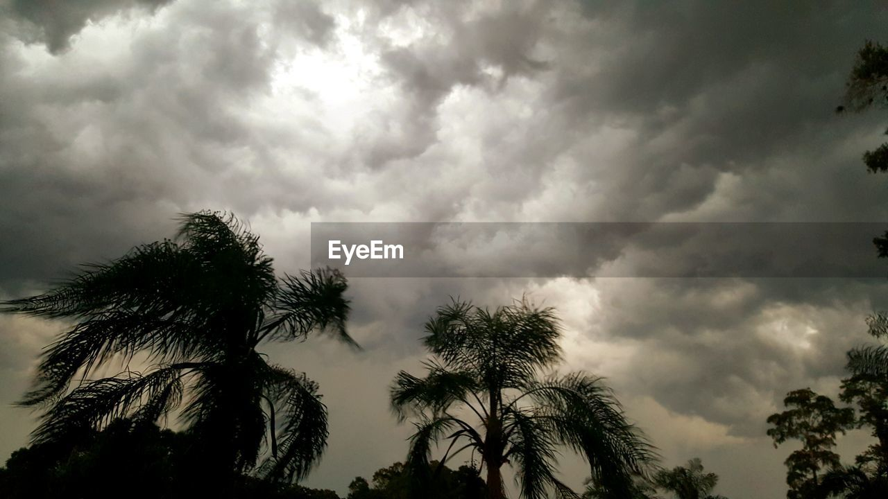 tree, low angle view, sky, cloud - sky, nature, palm tree, beauty in nature, growth, outdoors, no people, day, silhouette, scenics, storm cloud, tranquility
