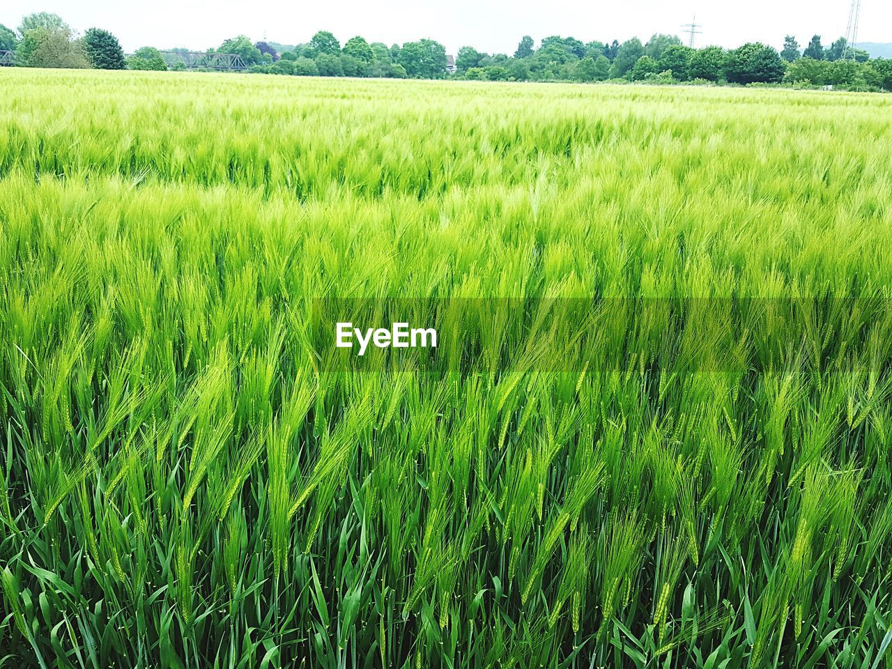 plant, field, landscape, agriculture, growth, rural scene, green color, land, crop, environment, cereal plant, farm, scenics - nature, beauty in nature, tranquility, tranquil scene, nature, day, no people, cultivated land, outdoors, plantation