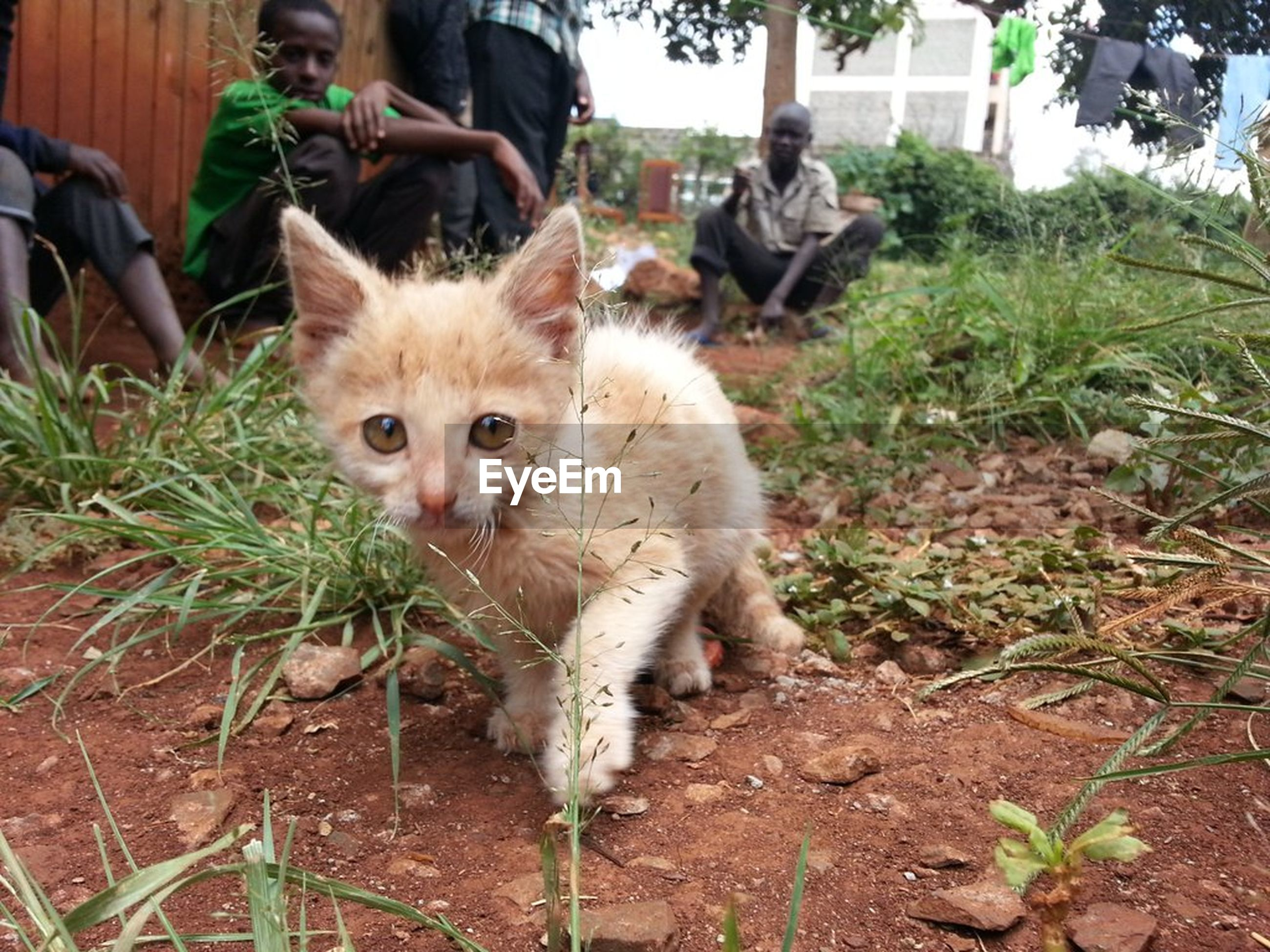 animal themes, domestic animals, pets, one animal, mammal, domestic cat, cat, front view, feline, whisker, curiosity, outdoors, zoology, day, animal head, focus on foreground, messy, footpath, kitten