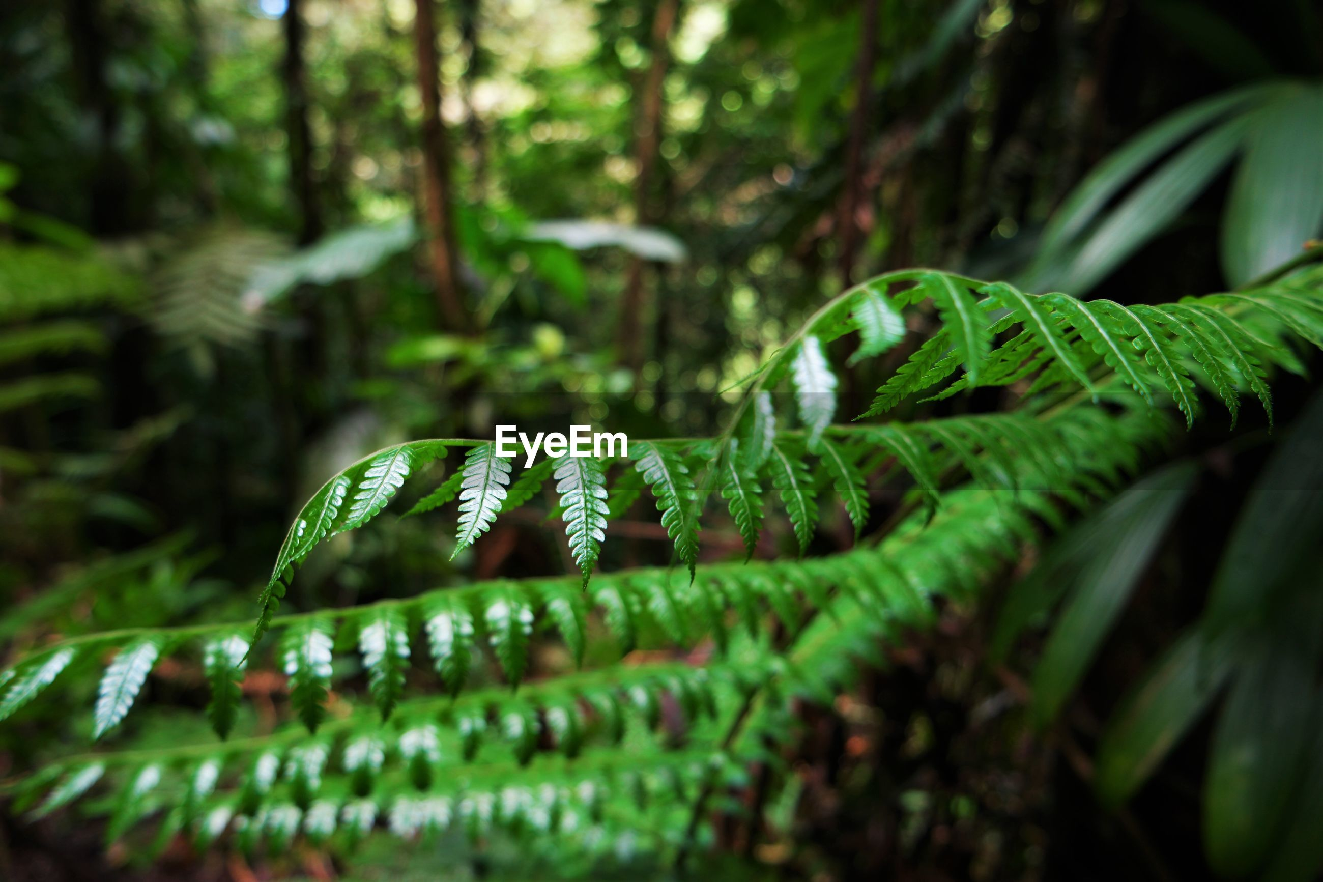 Close-up of fern in forest