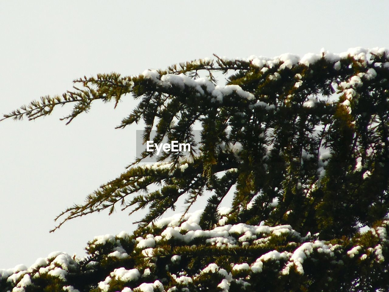 winter, cold temperature, snow, nature, weather, no people, tree, beauty in nature, day, outdoors, frozen, low angle view, growth, branch, close-up, clear sky, sky, freshness