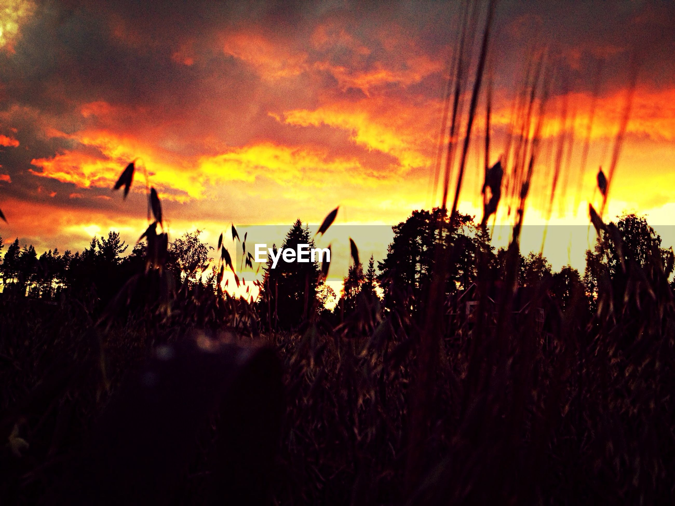 sunset, silhouette, orange color, sky, scenics, beauty in nature, cloud - sky, tranquility, tranquil scene, plant, nature, growth, idyllic, sun, dramatic sky, field, landscape, cloud, cloudy, atmospheric mood