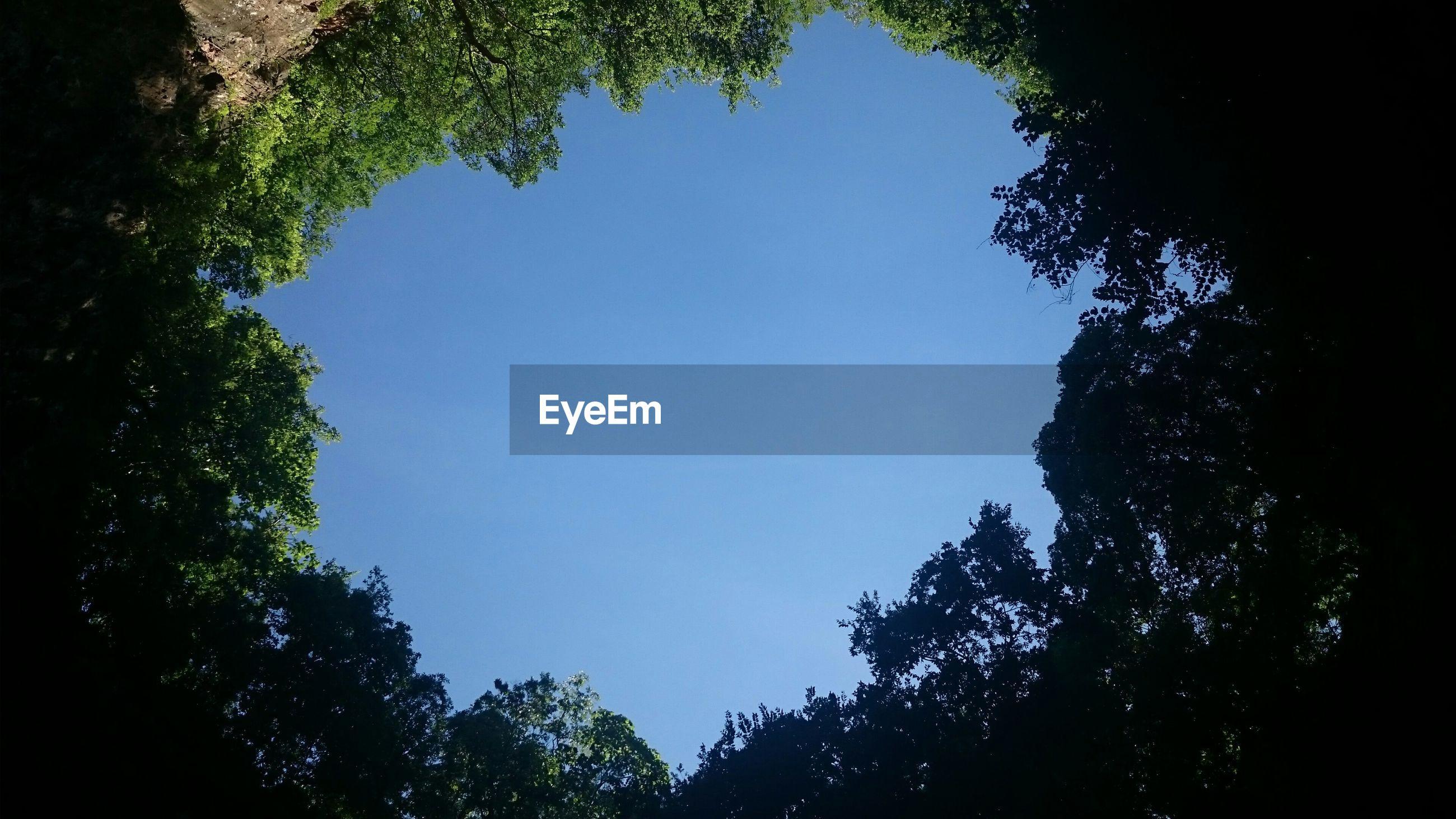 Blue sky seen through trees