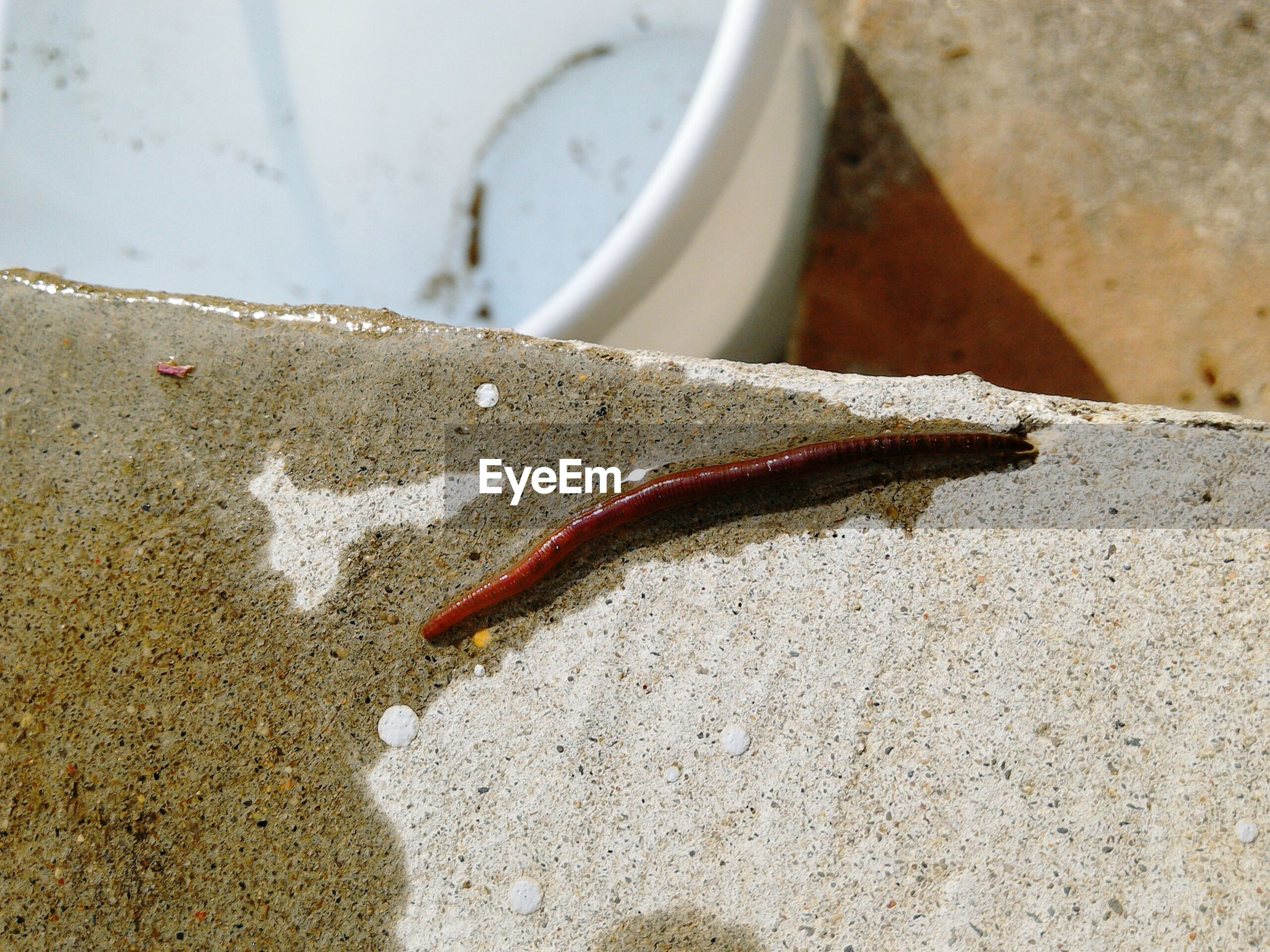 Close-up of earthworm on retaining wall