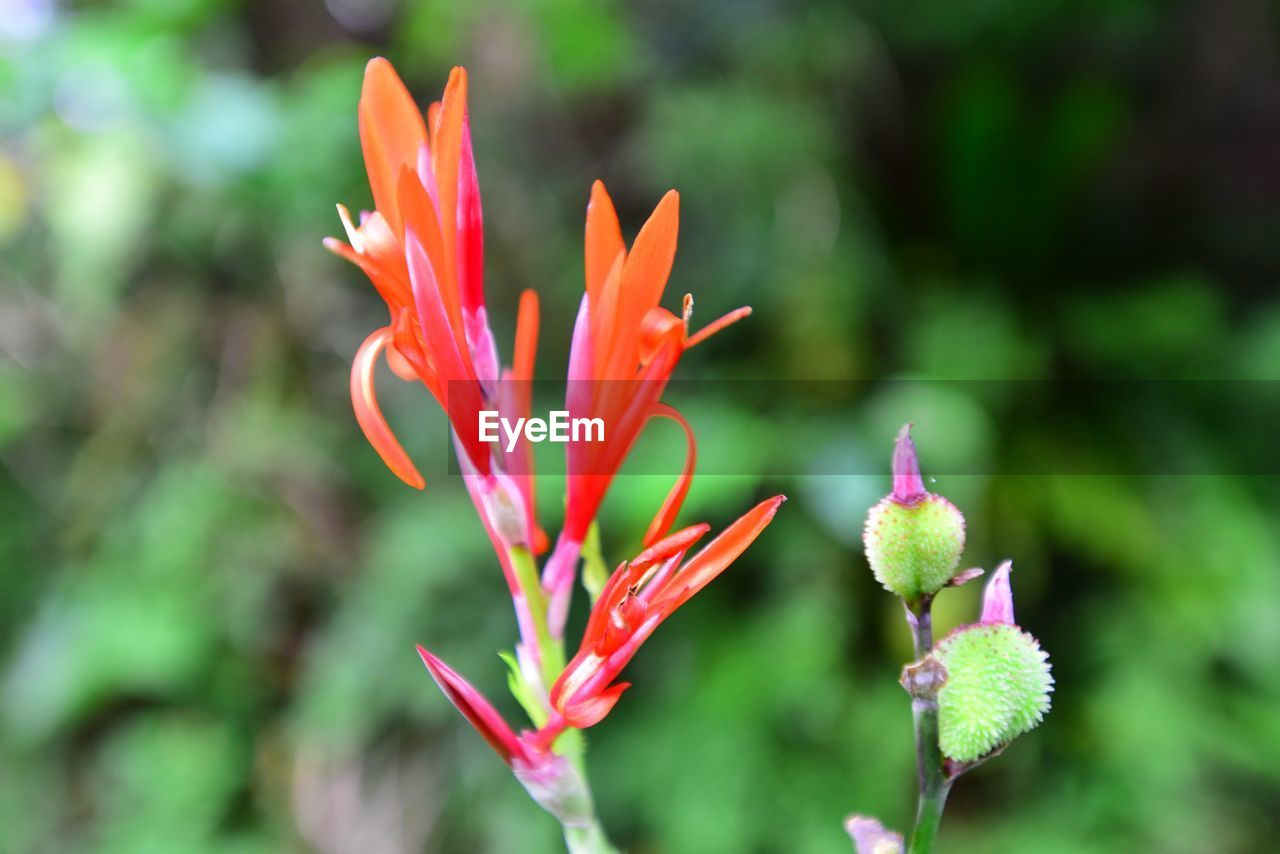 flower, growth, nature, beauty in nature, petal, plant, fragility, freshness, blooming, flower head, outdoors, day, no people, close-up