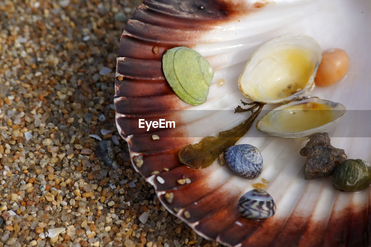 food and drink, food, shell, no people, close-up, freshness, high angle view, animal shell, seafood, indoors, animal wildlife, seashell, healthy eating, wellbeing, animal, focus on foreground, still life, day, oyster, fruit, temptation