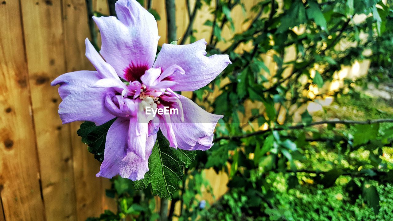 flower, fragility, growth, nature, beauty in nature, petal, freshness, flower head, no people, blooming, plant, close-up, outdoors, day, branch, tree