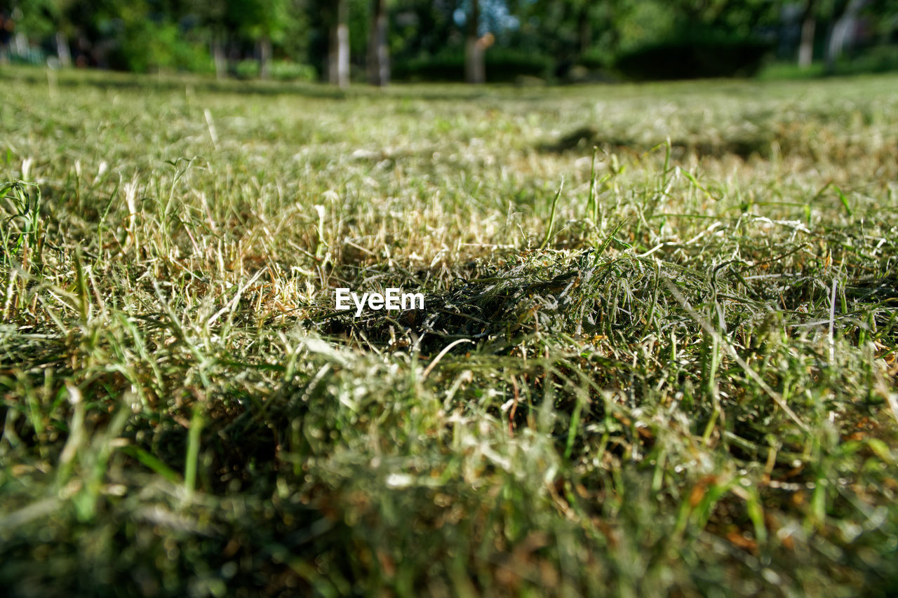 plant, selective focus, grass, growth, day, land, nature, field, no people, green color, tranquility, close-up, surface level, outdoors, beauty in nature, sunlight, tree, environment, falling, vulnerability, blade of grass